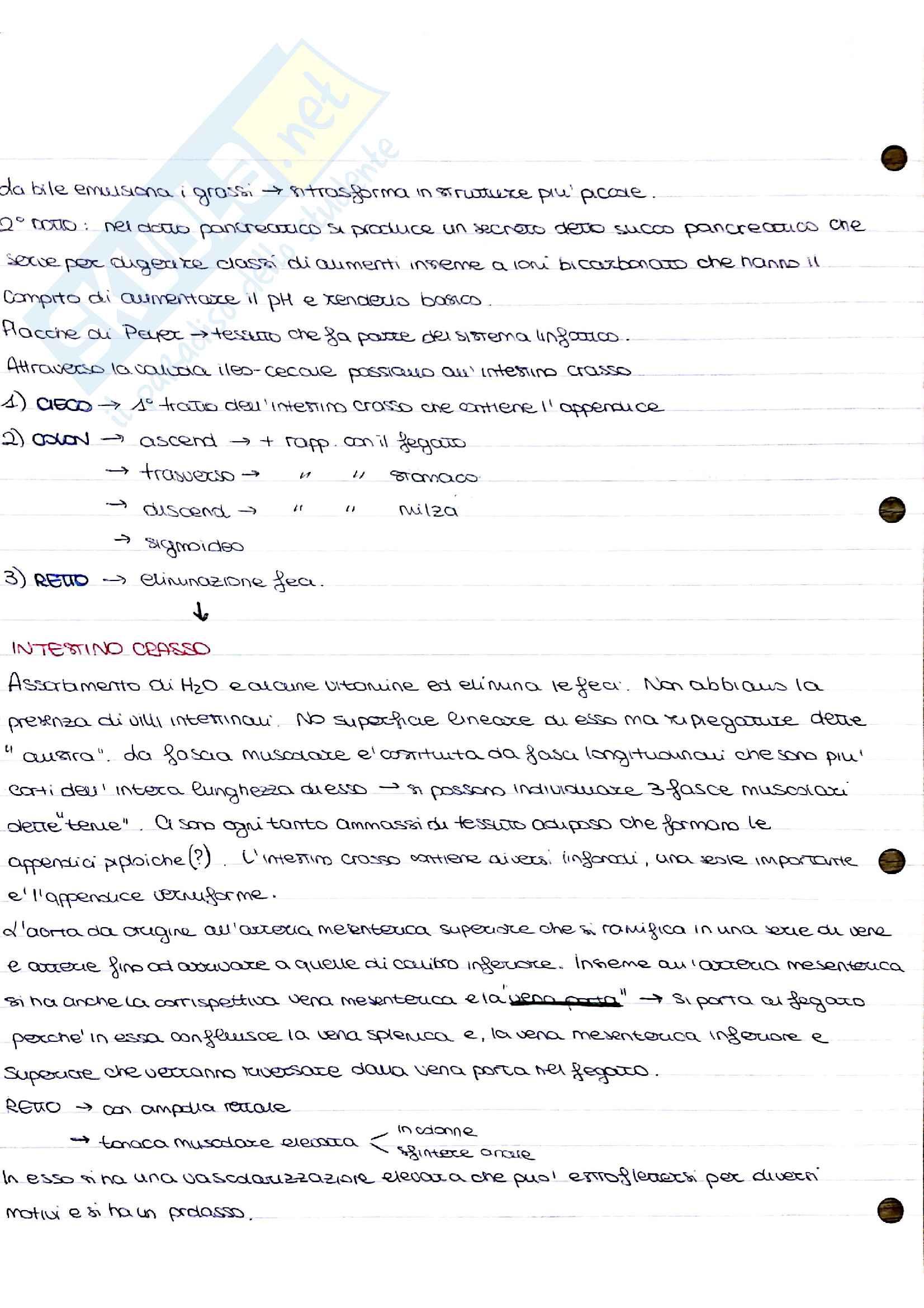 Appunti di anatomia umana Pag. 6