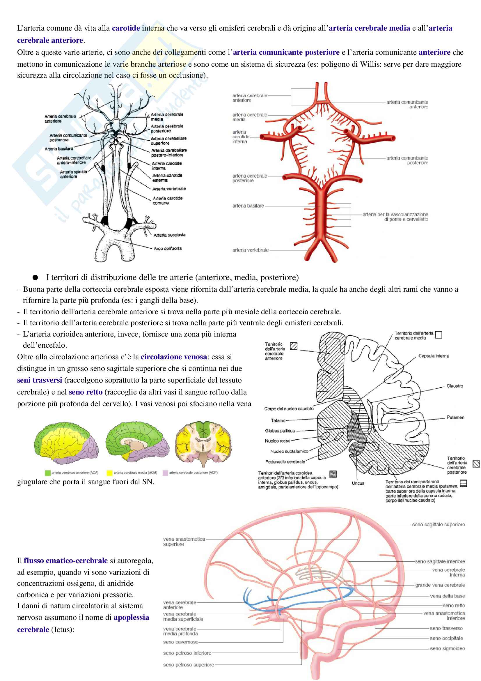 Esame di Neuroscienze (Fisiologia e Anatomia) 2016/2017 - Appunti intero corso - Prof. FOGASSI e BONINI Pag. 21