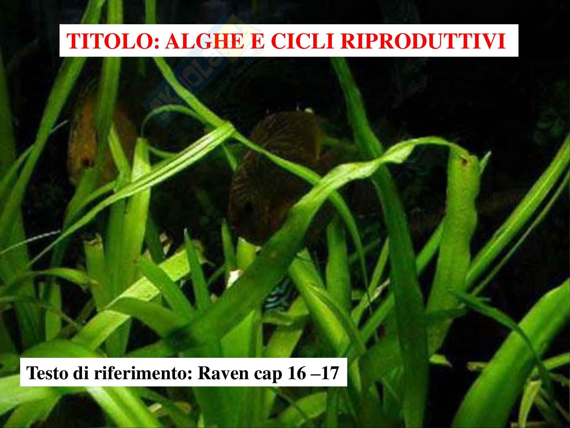 Biologia vegetale - alghe e cicli riproduttivi