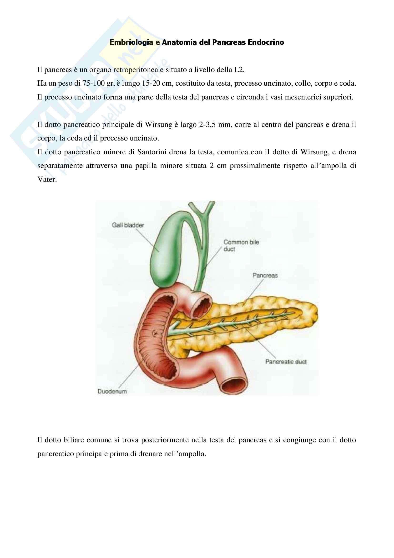 Endocrinologia - Embriologia e Anatomia del Pancreas Endocrino