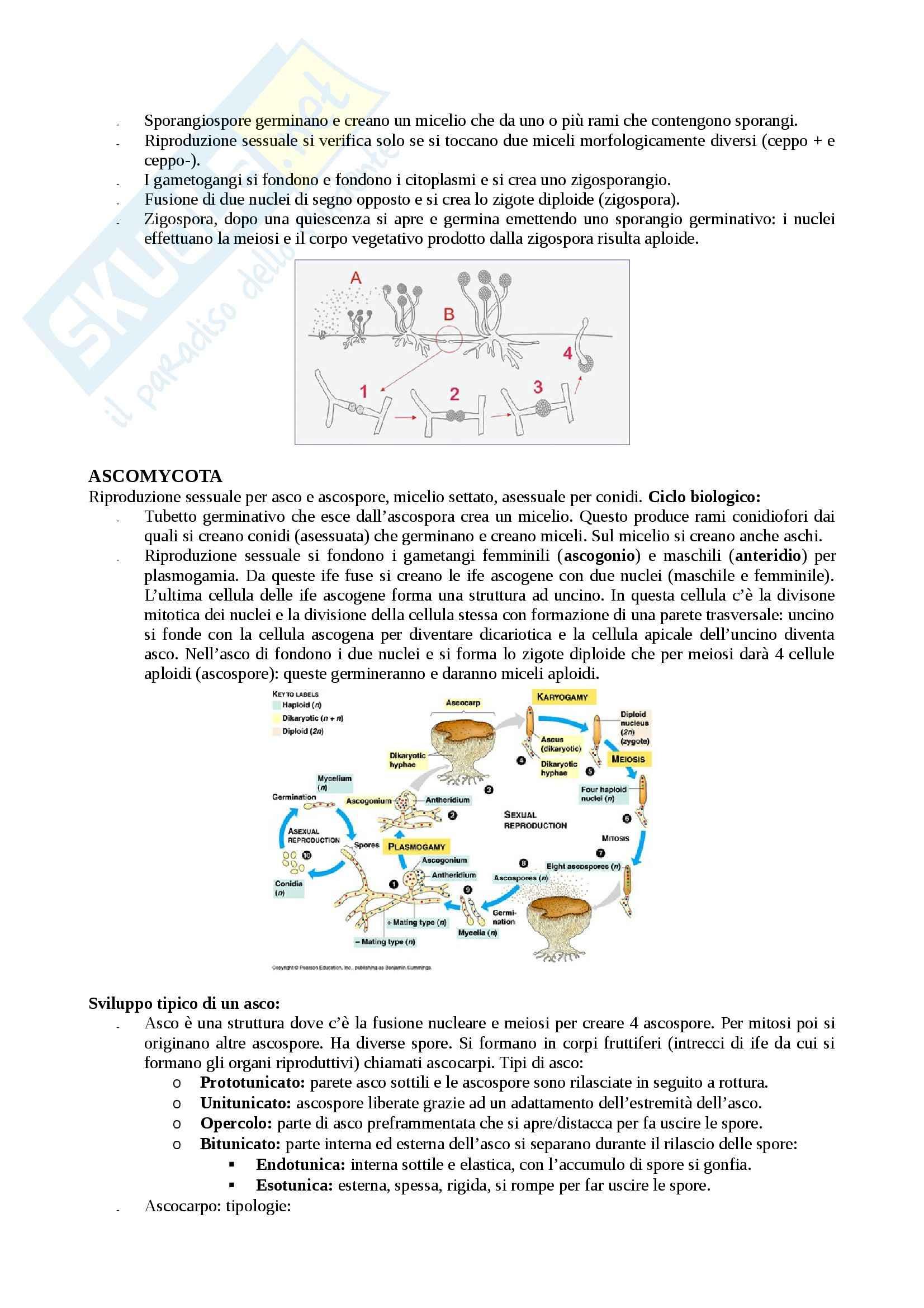 Microbiologia agraria - Appunti Pag. 96