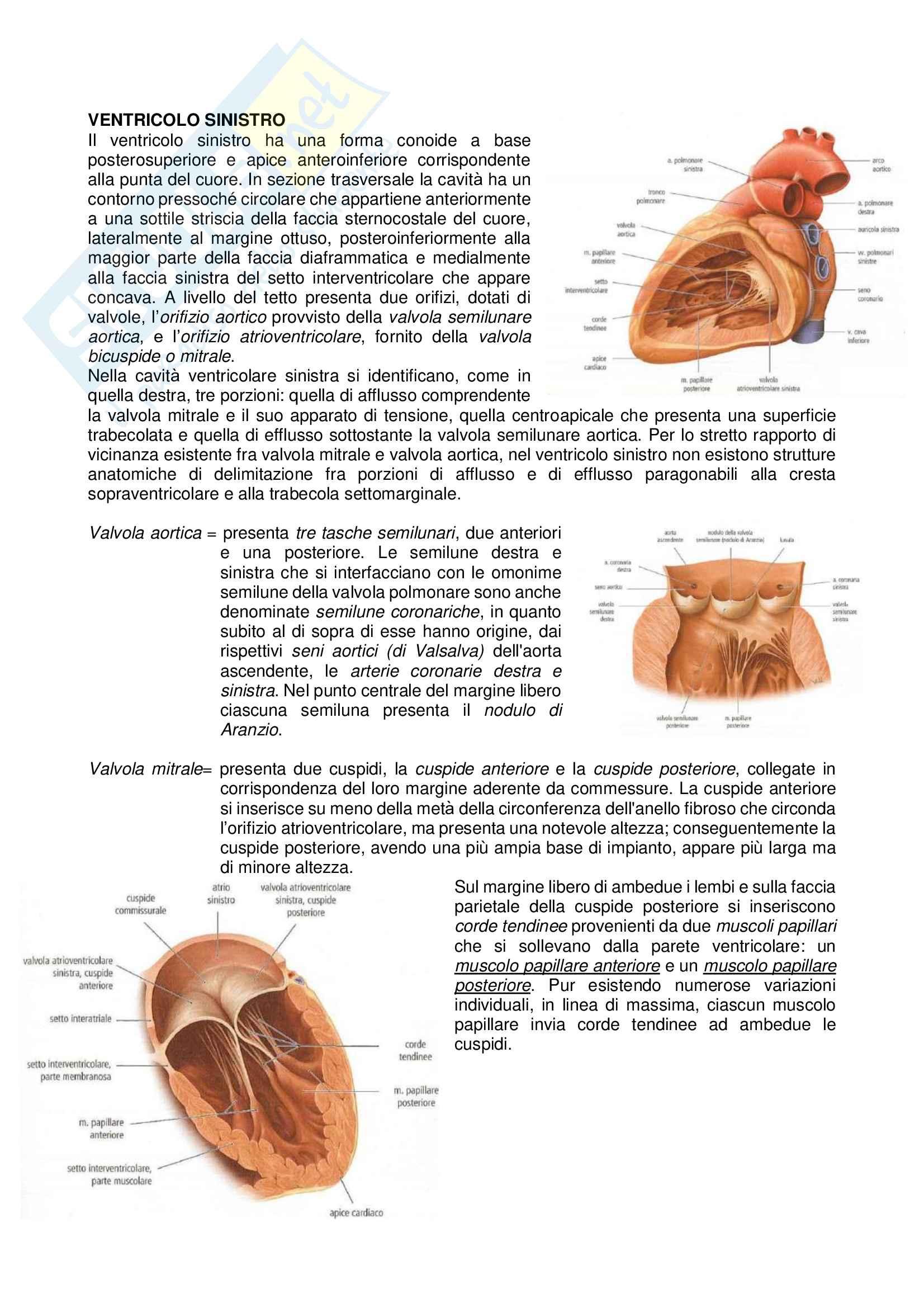 Appunti Cuore Anatomia II con immagini Pag. 11