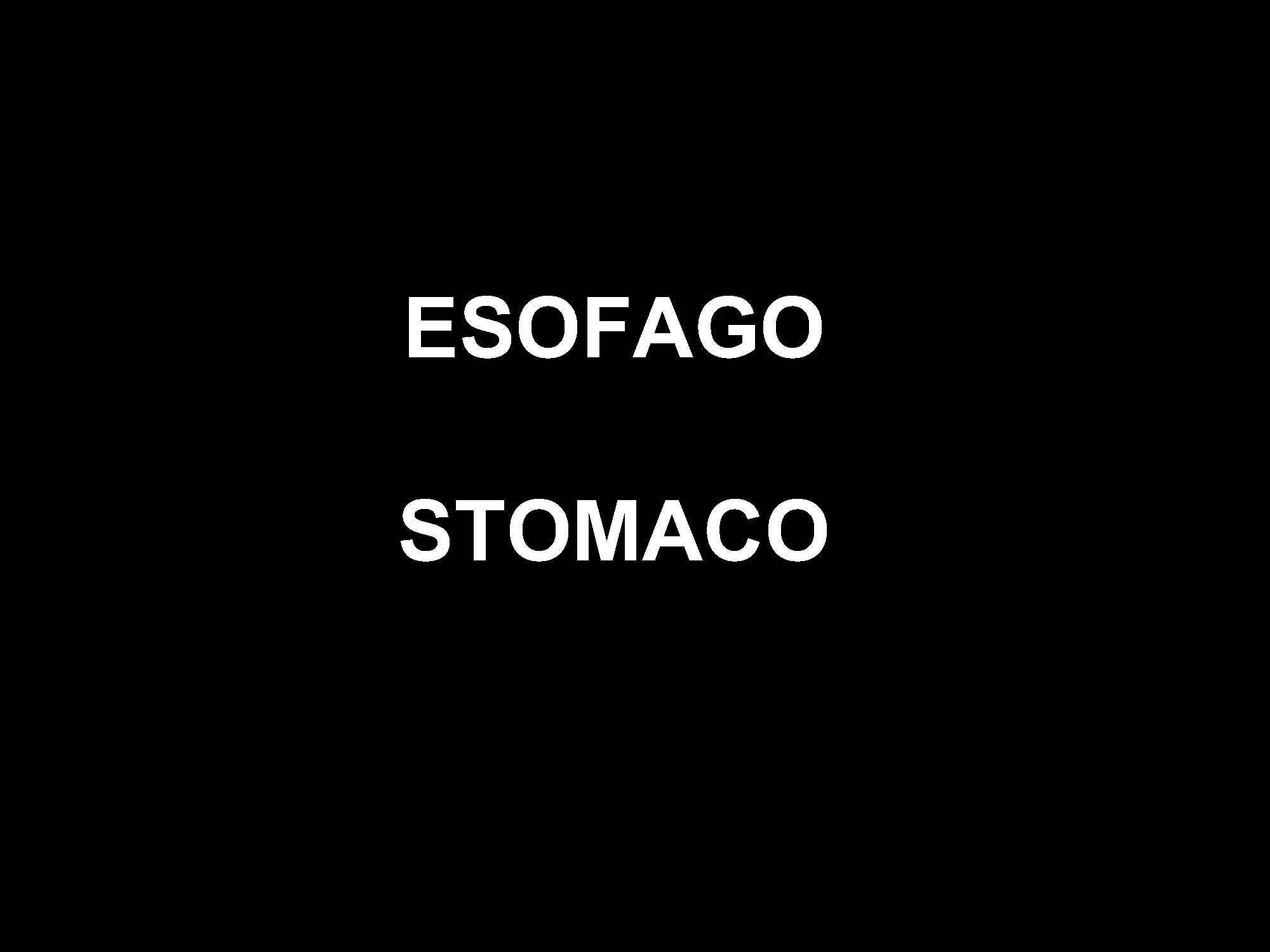 Istologia - Fegato, pancreas, stomaco, esofago