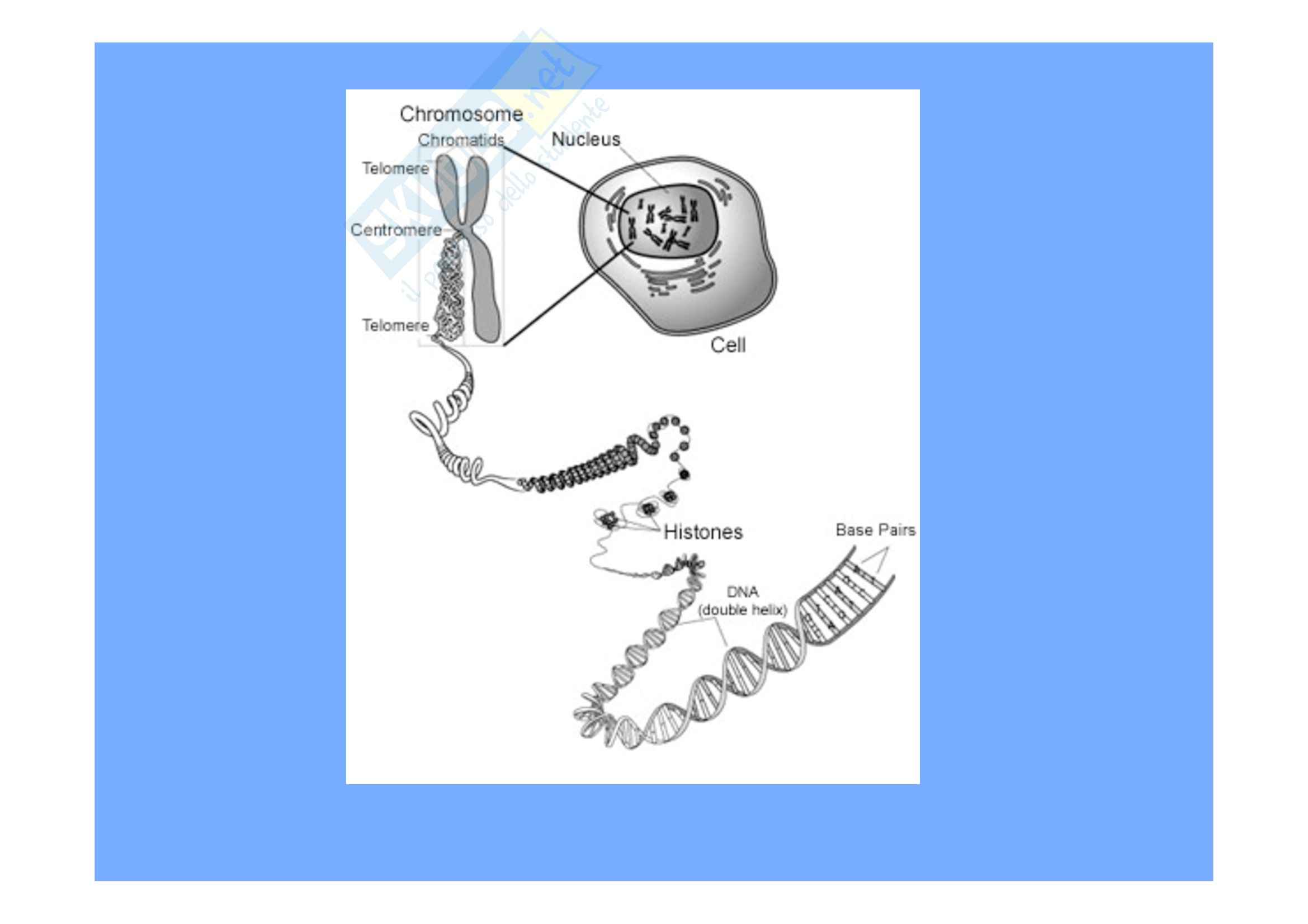 Genetica umana - cromosomopatie - Appunti