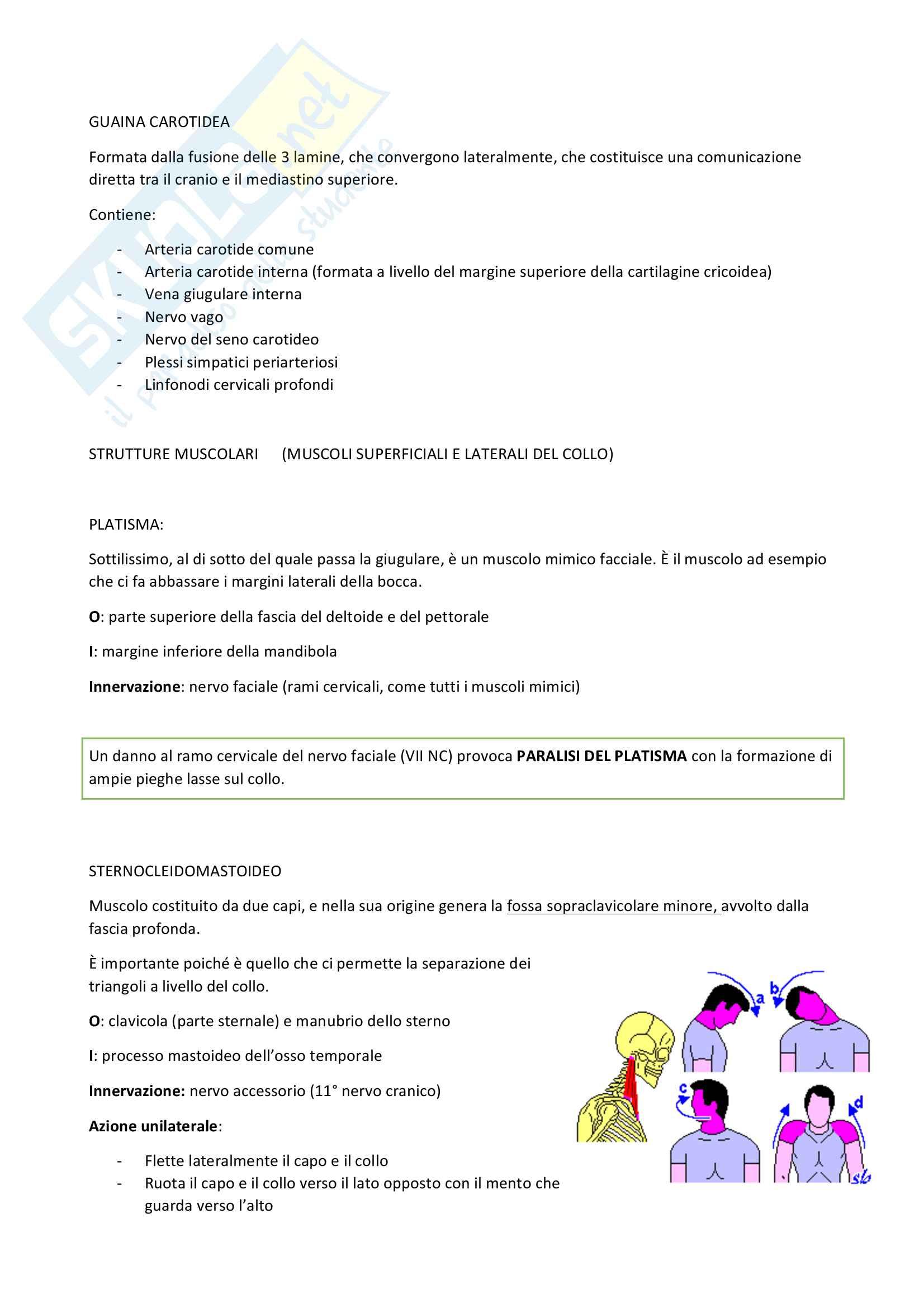 Appunti Anatomia - Collo Pag. 6