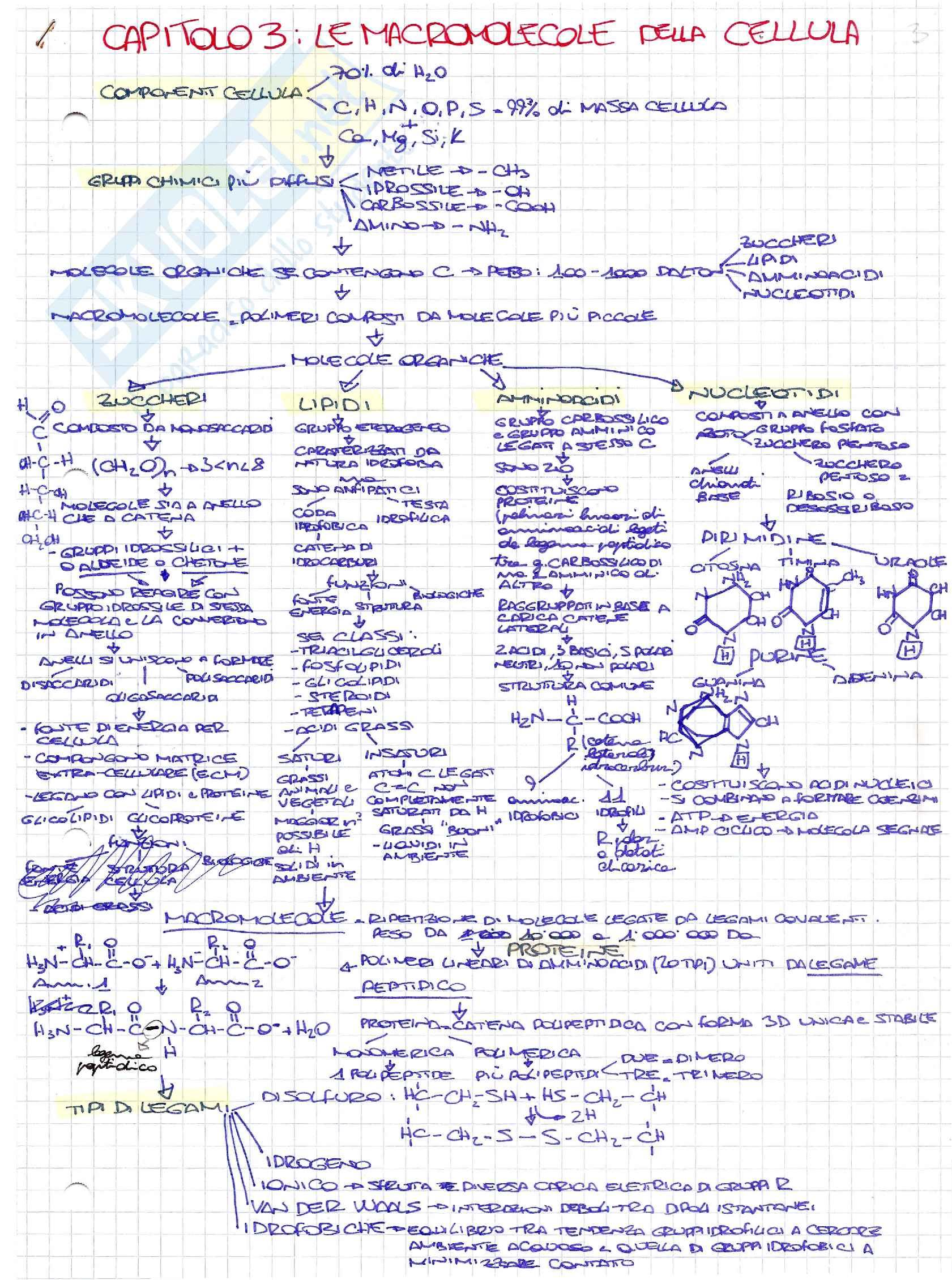 Schemi di biologia generale e cellulare per l'esame della prof. Patrizia Limonta sulle macromolecole fondamentali dal punto di vista biologico