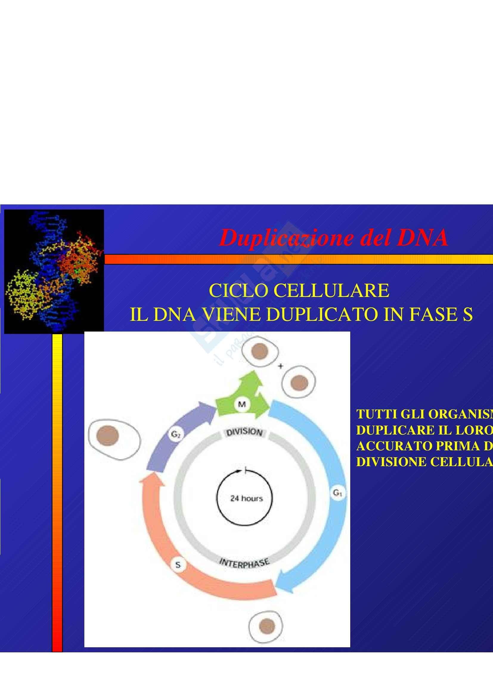 Biologia e genetica - ciclo cellulare
