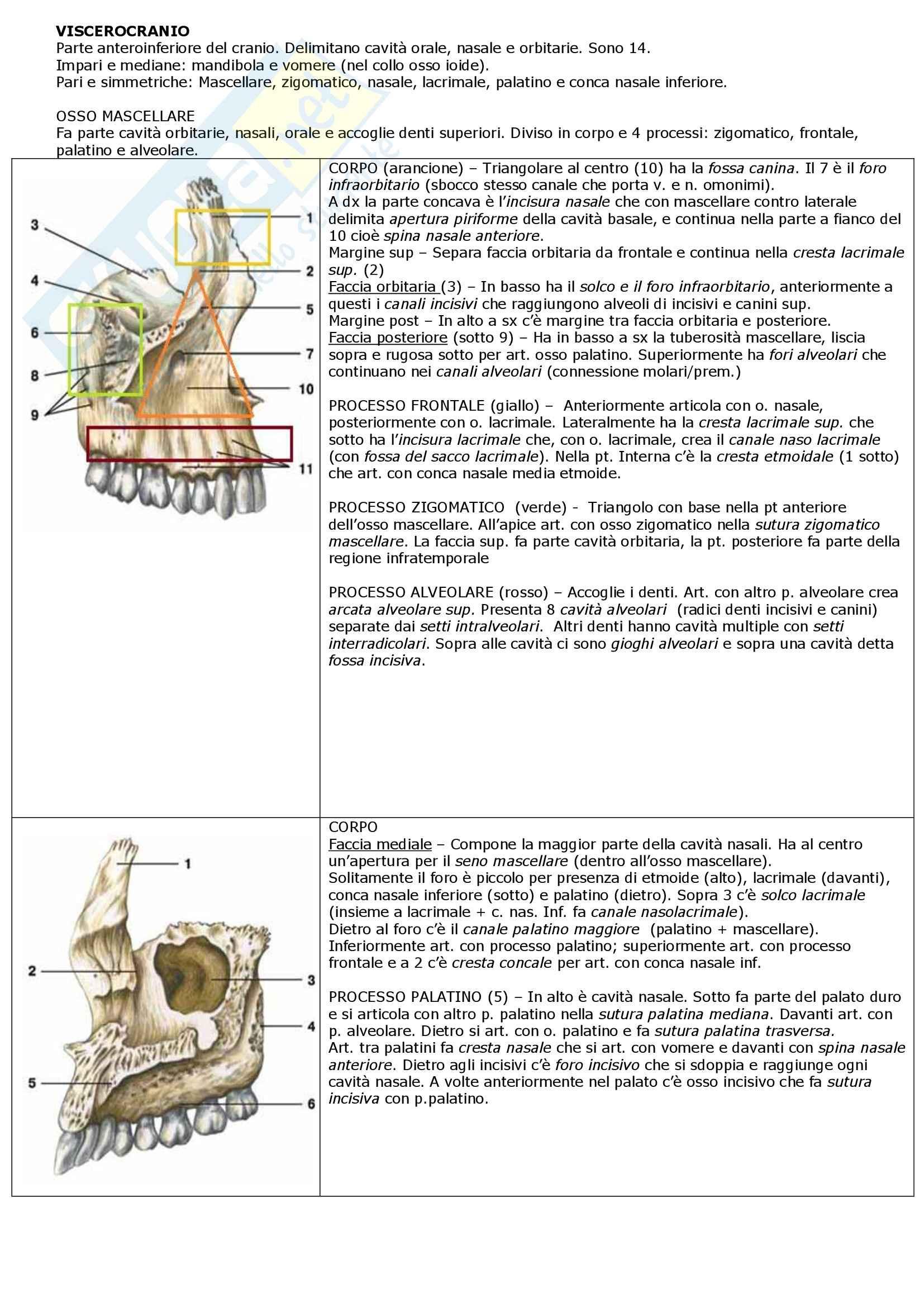 Riassunto esame Anatomia: apparato locomotore, prof. Mammola Pag. 11