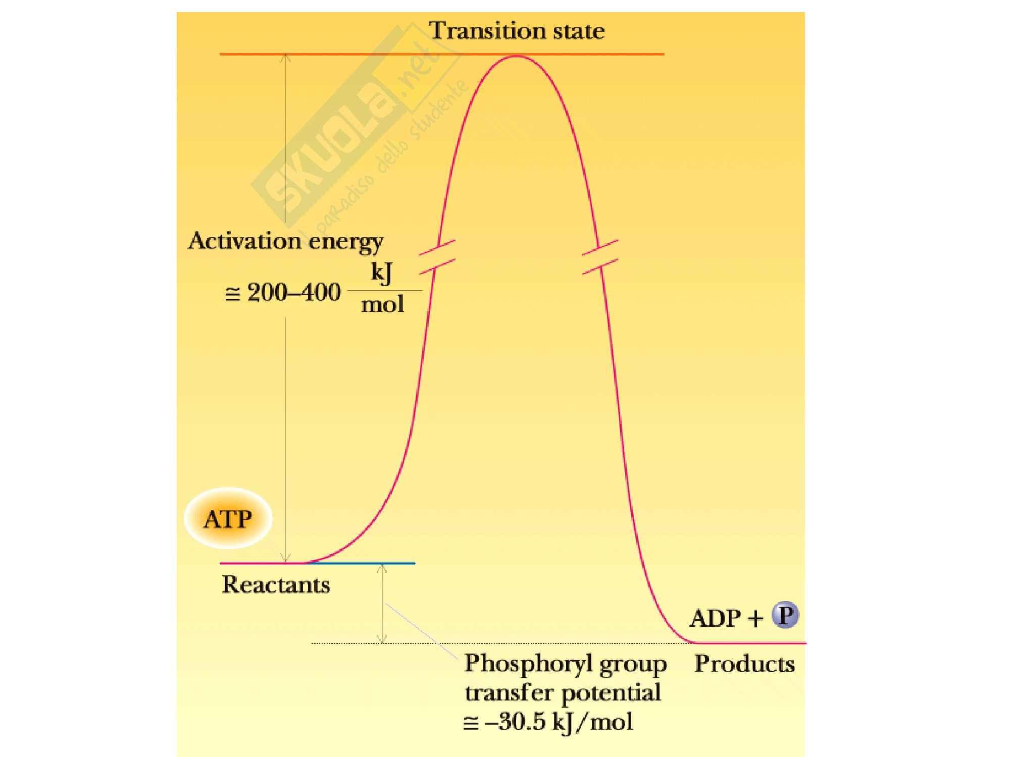 Biochimica -  L' accoppiamento energetico Pag. 6