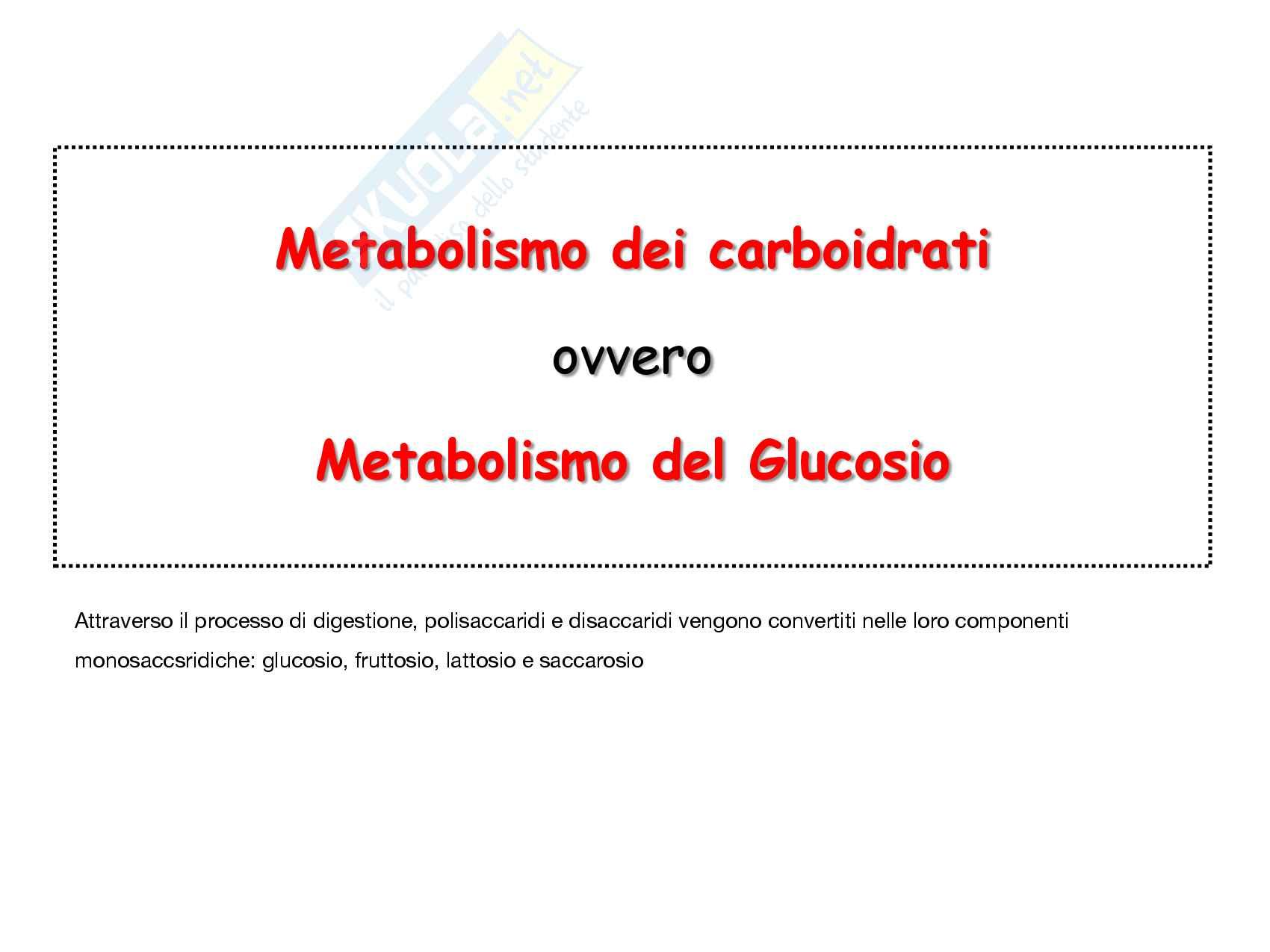 3 Glicolisi e destini metabolici del piruvato, reazioni chimiche, regolazione e funzioni