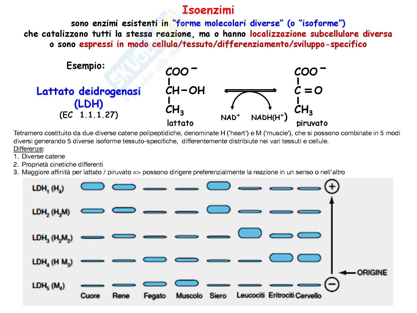 3 Glicolisi e destini metabolici del piruvato, reazioni chimiche, regolazione e funzioni Pag. 36