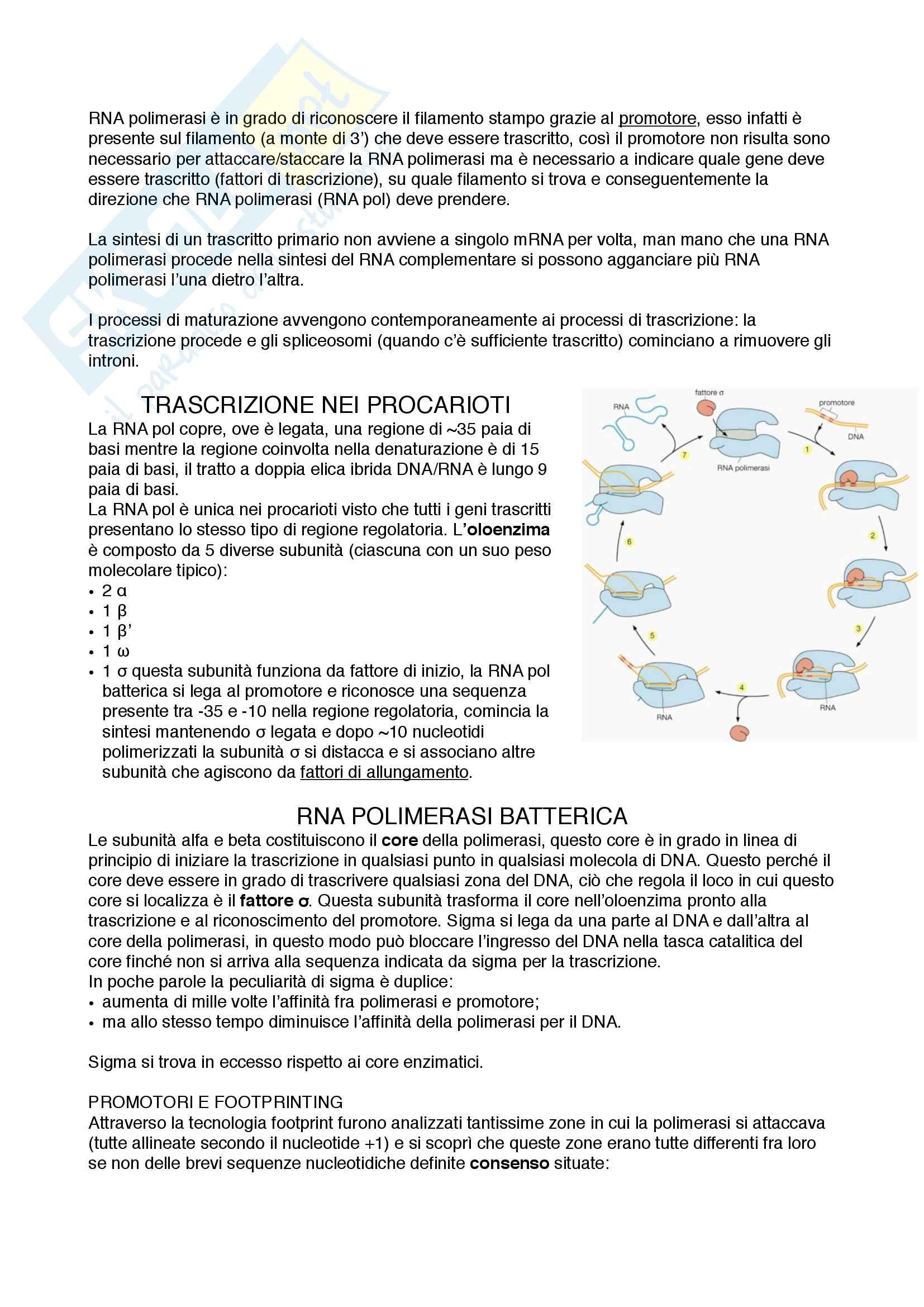 Documento completo per esame di Biologia molecolare med 3-4 UNIPD Pag. 6