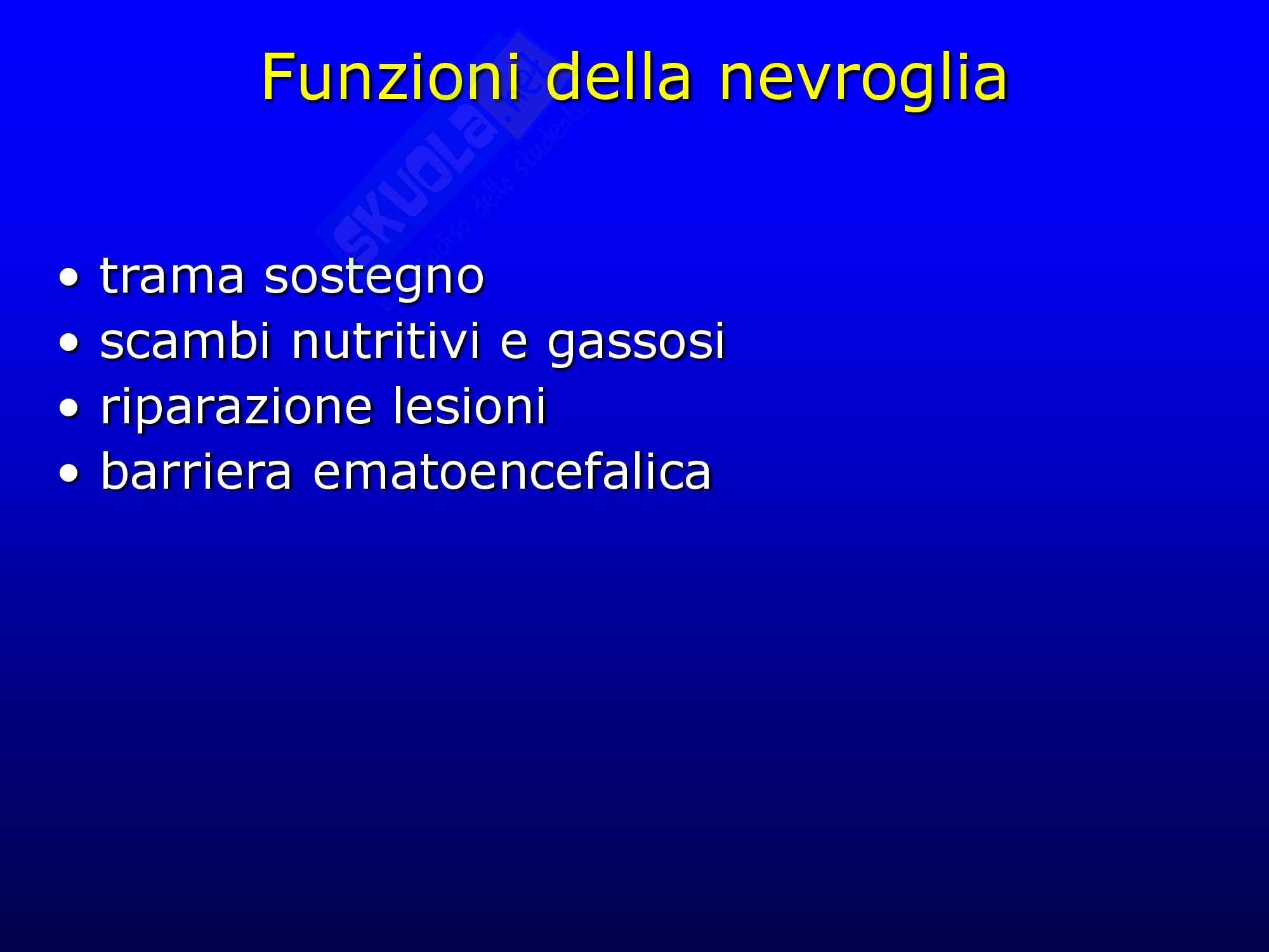 Tessuto nervoso Pag. 26