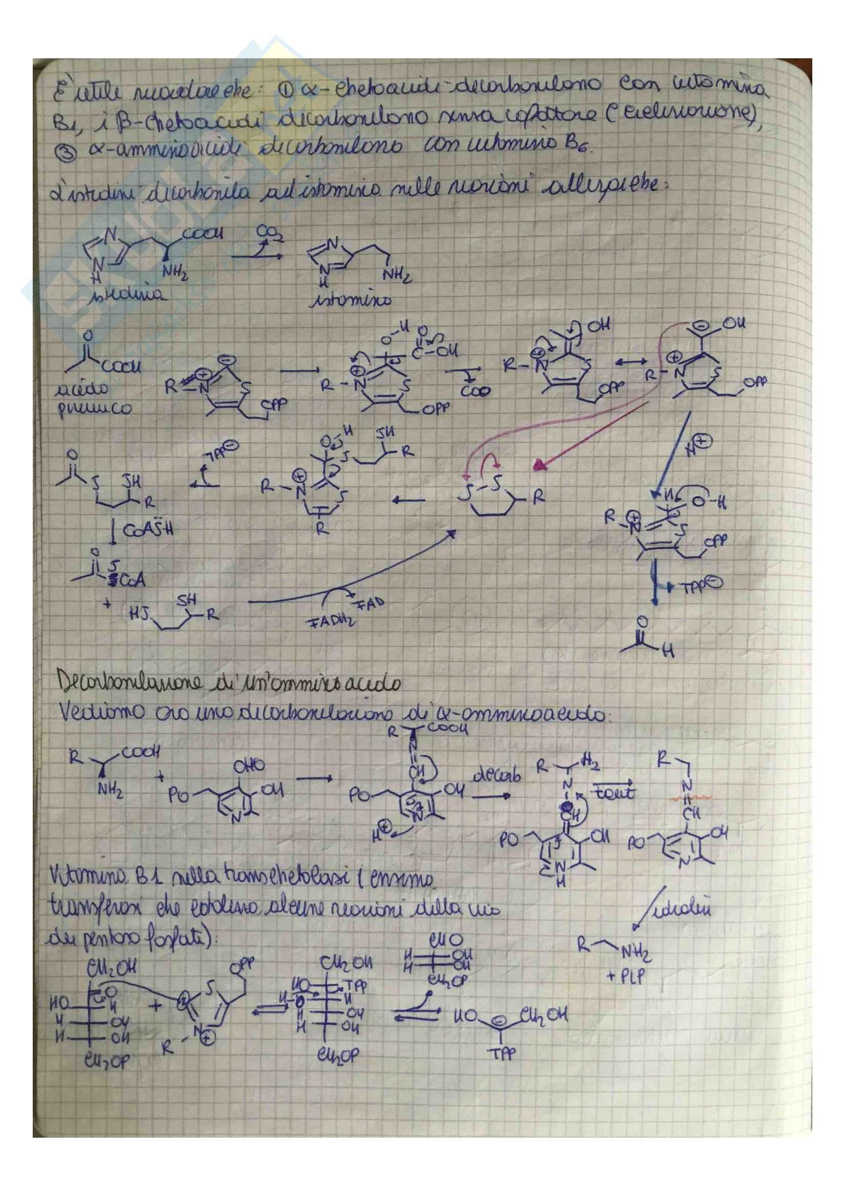 Appunti di Chimica Organica 3 (Chimica delle sostanze naturali) Pag. 21