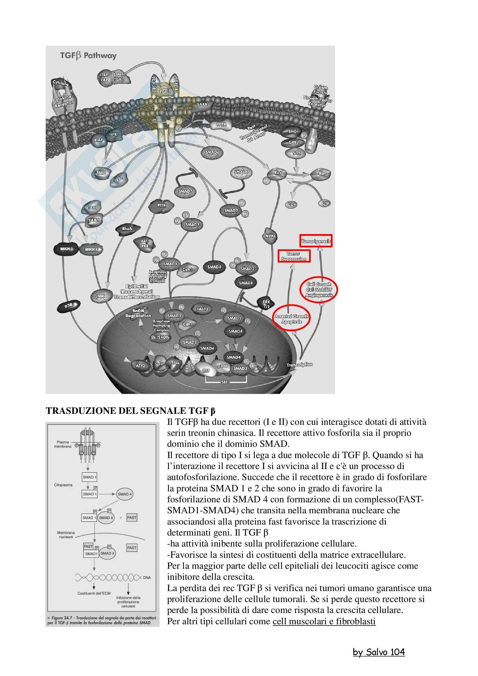 Patologia generale - la trasduzione del segnale TGF-beta