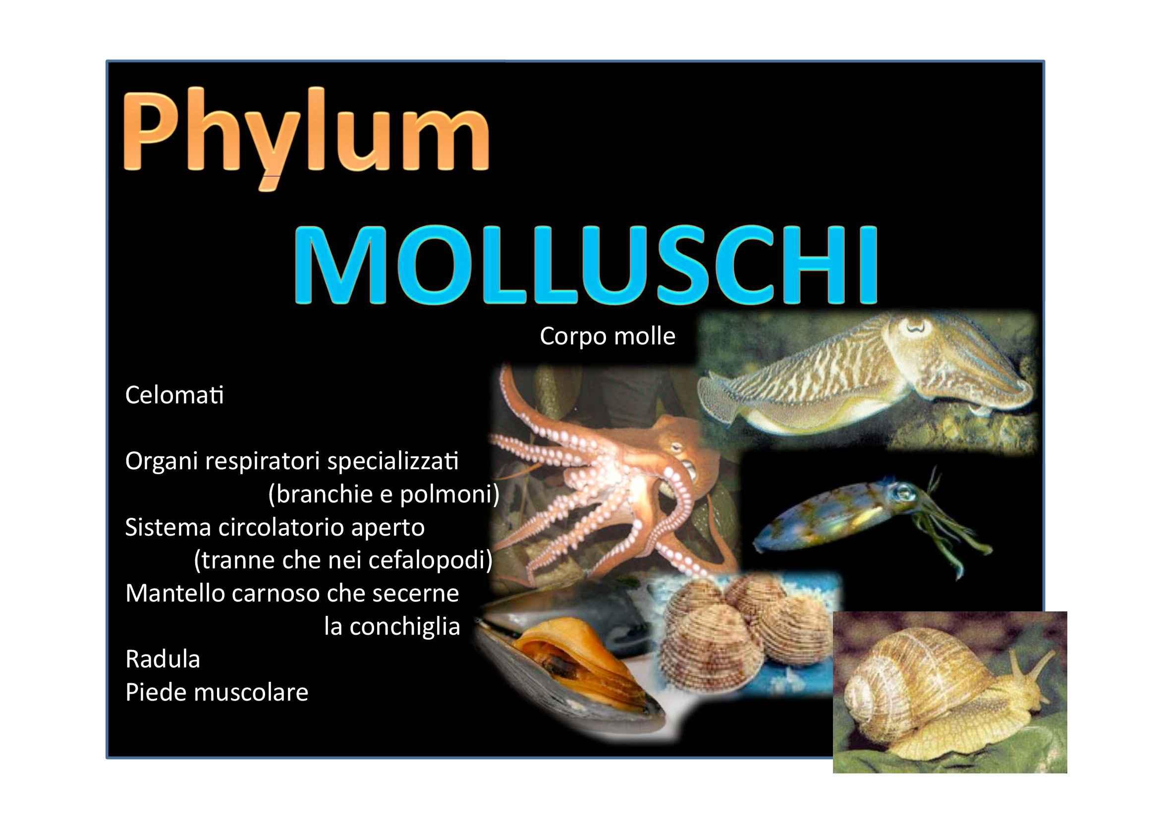 Molluschi, Artopodi ed Echinodermi