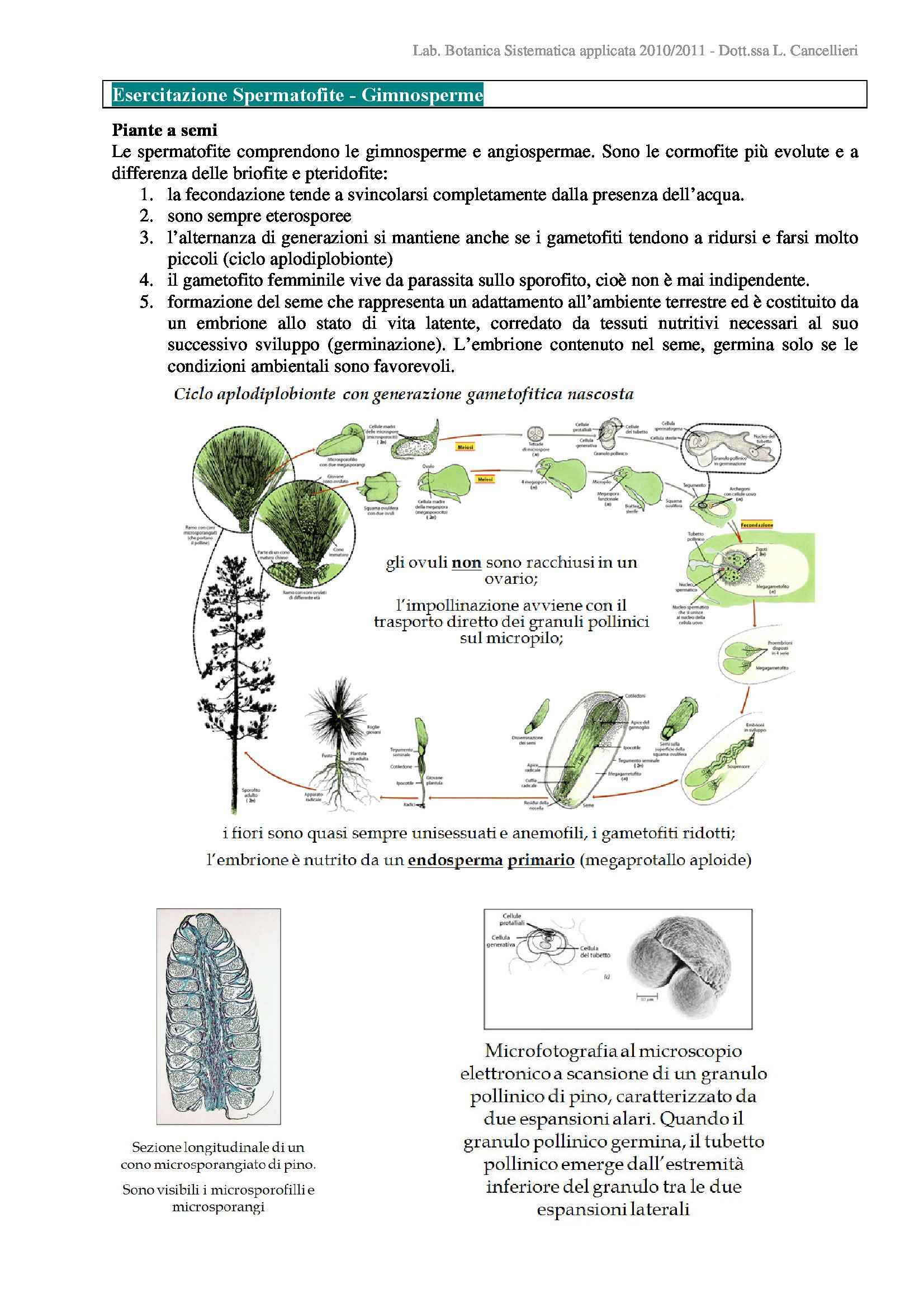 Spermatofite - Gimnosperme