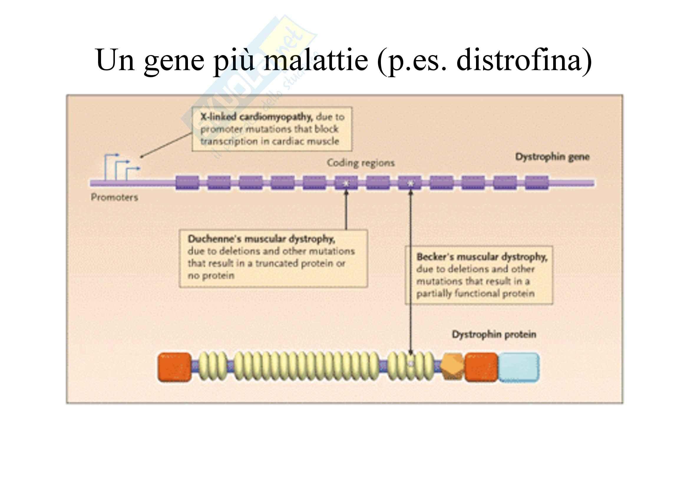 Genetica umana - variabilità del fenotipo - Appunti Pag. 61
