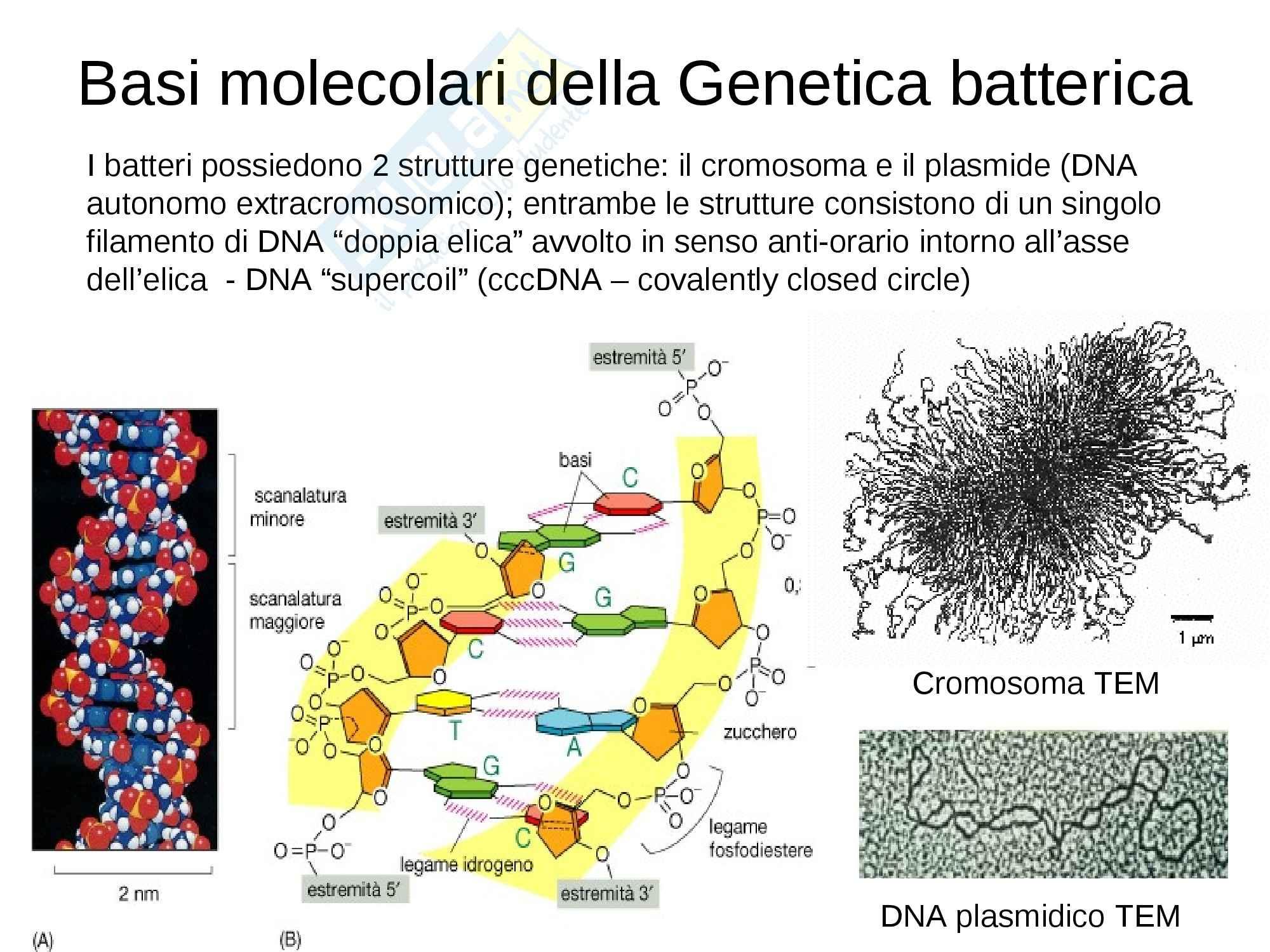 Genetica batterica