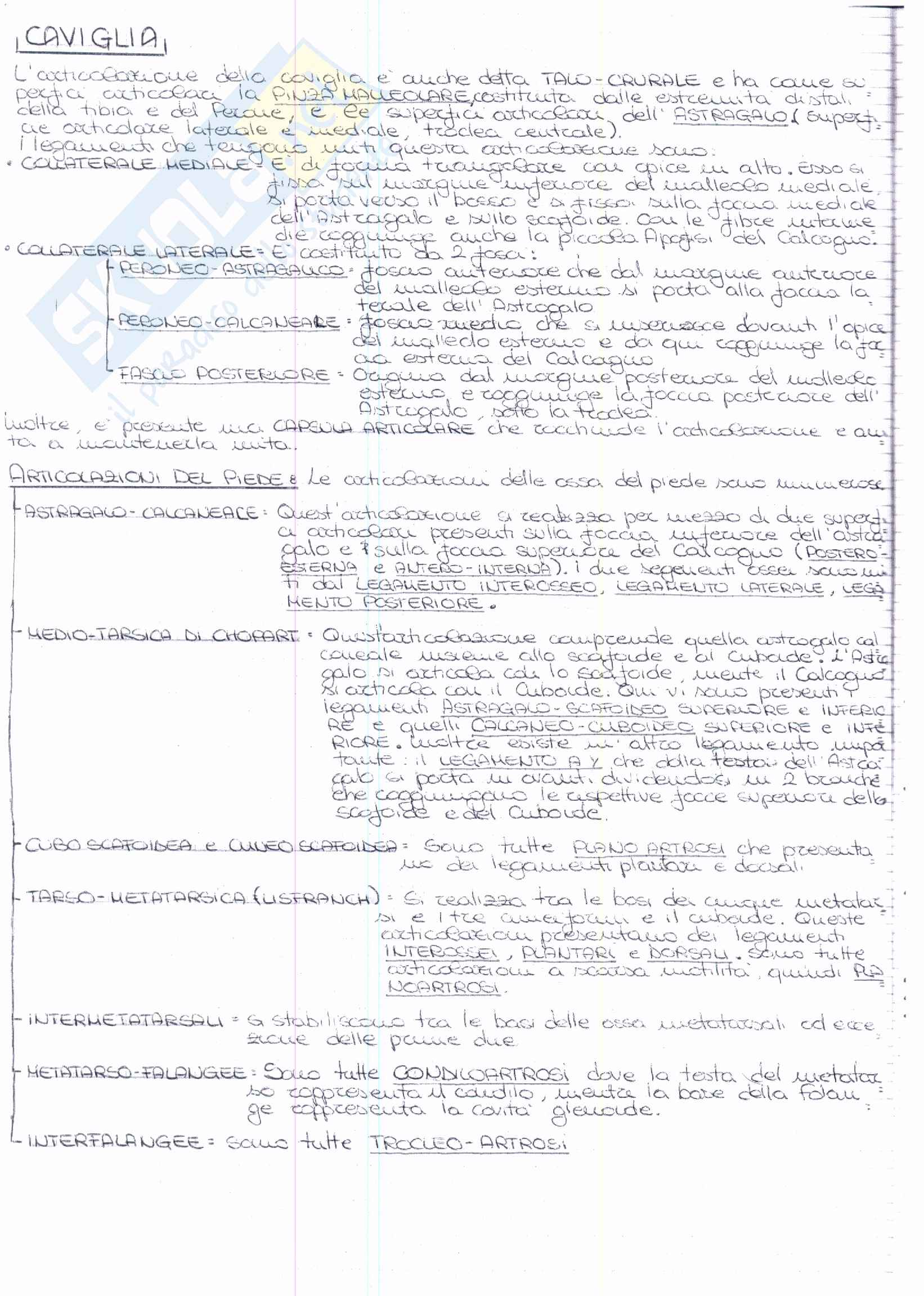 Riassunto esame Anatomia, prof. Ripani, libro consigliato Anatomia Clinica, Marinozzi, Gaudio, Ripani Pag. 16