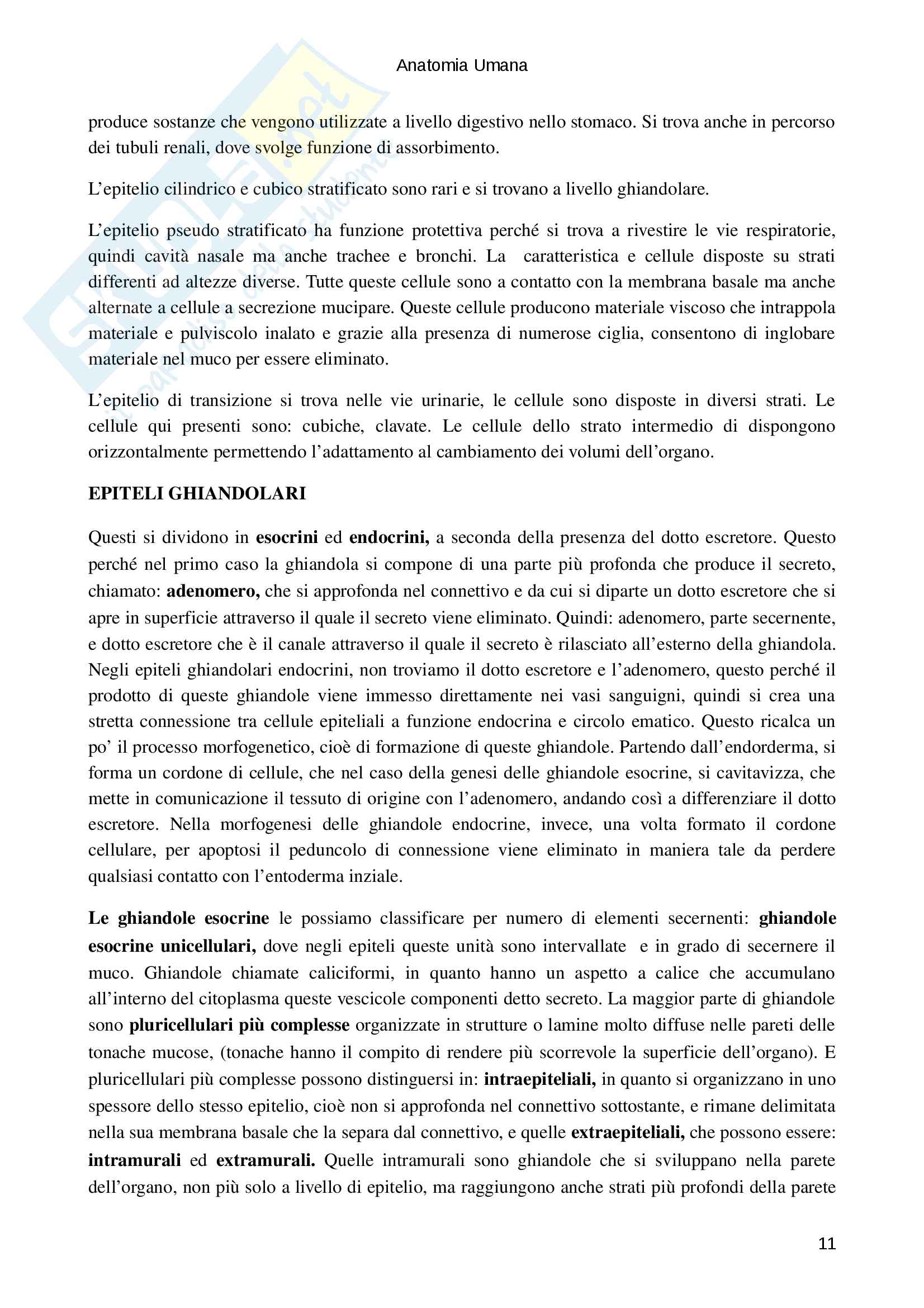 Tessuti epiteliali e connettivi Pag. 11