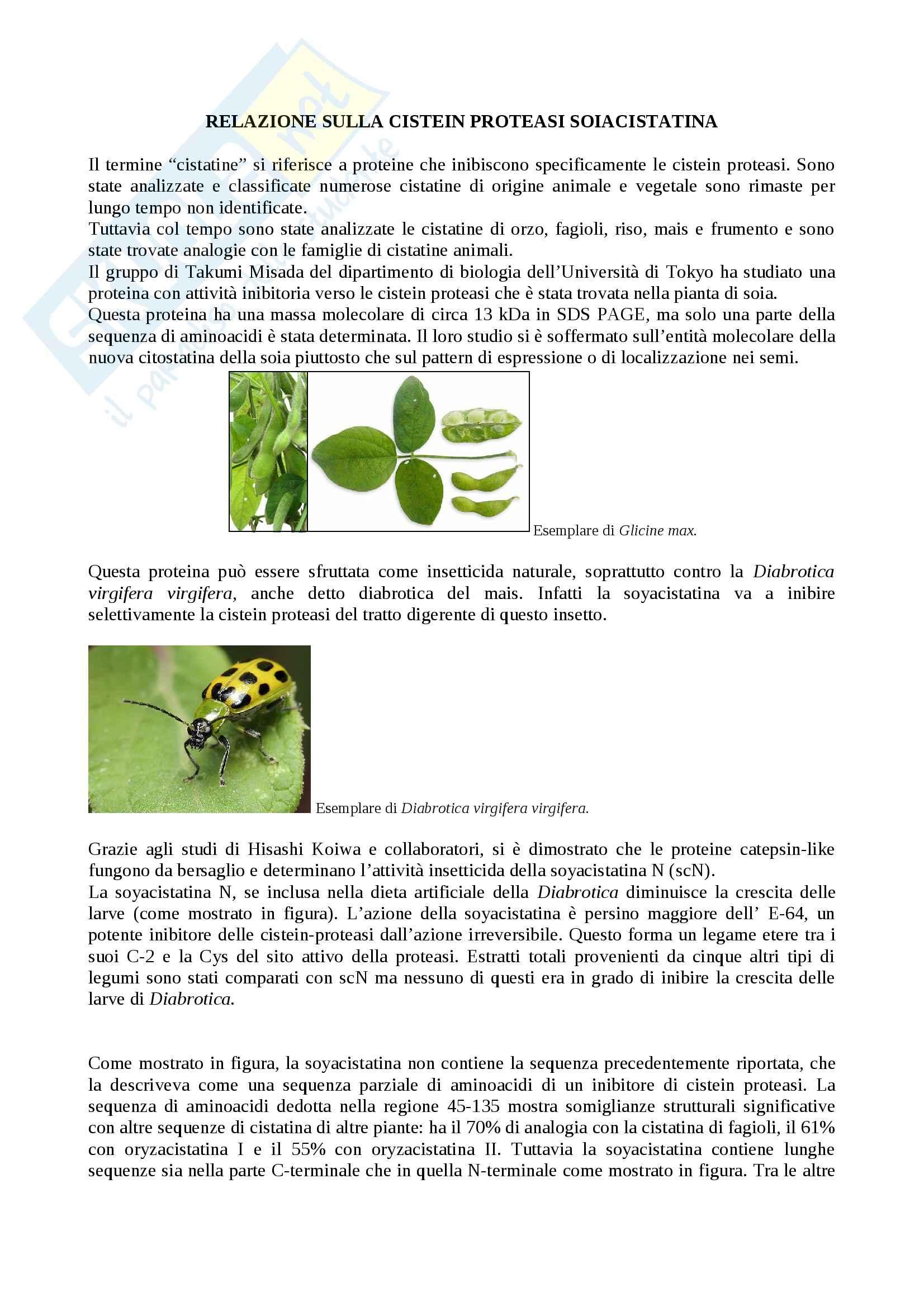 Cistein Proteasi soiacistatina, Proteine nuove Pag. 1