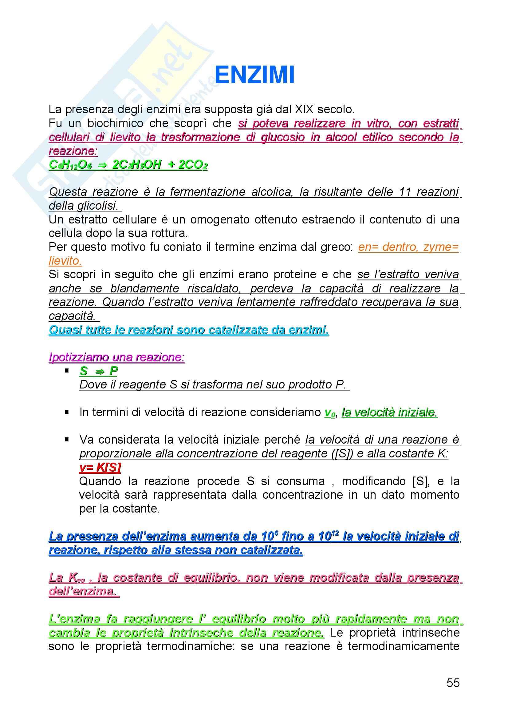 Biochimica I - Enzimi - Riassunto esame, prof. Camici