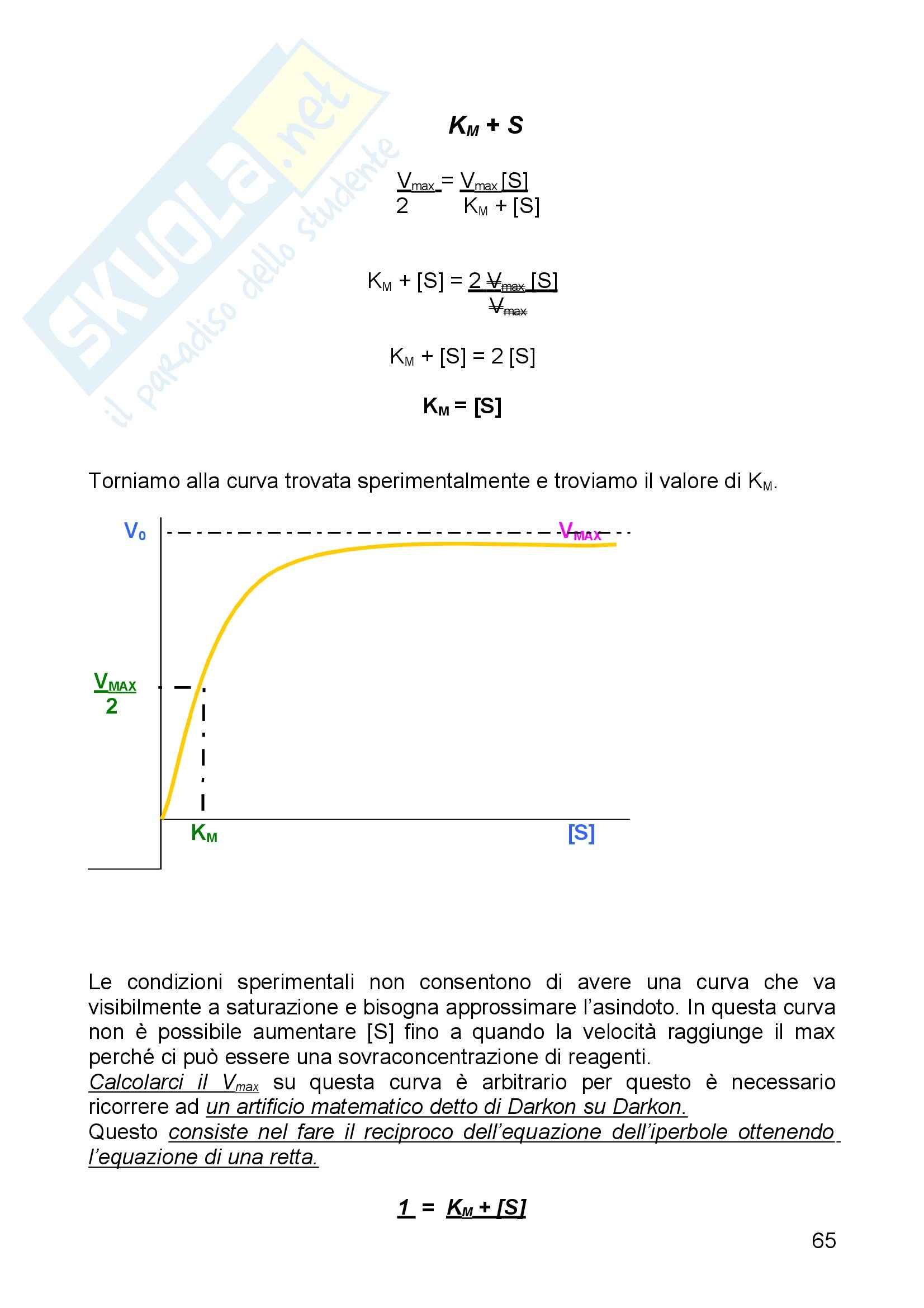 Biochimica I - Enzimi - Riassunto esame, prof. Camici Pag. 11