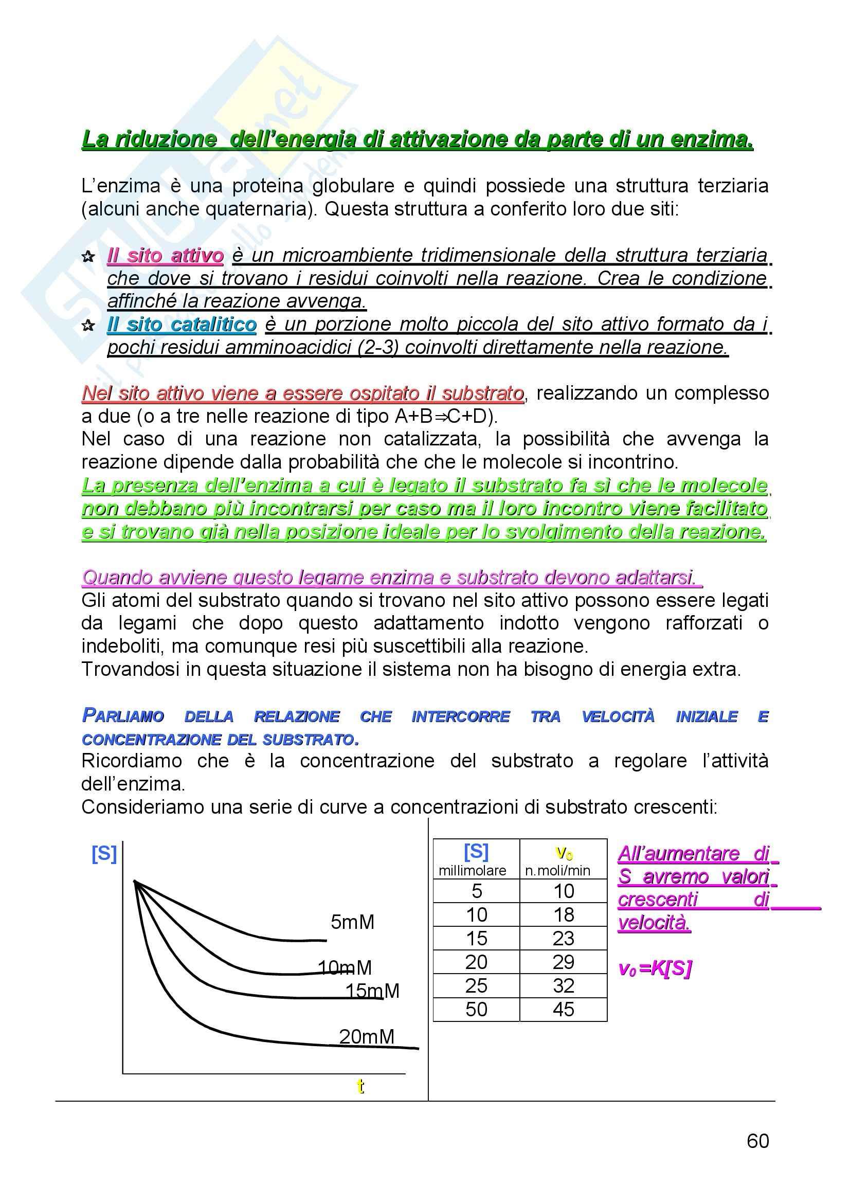 Biochimica I - Enzimi - Riassunto esame, prof. Camici Pag. 6