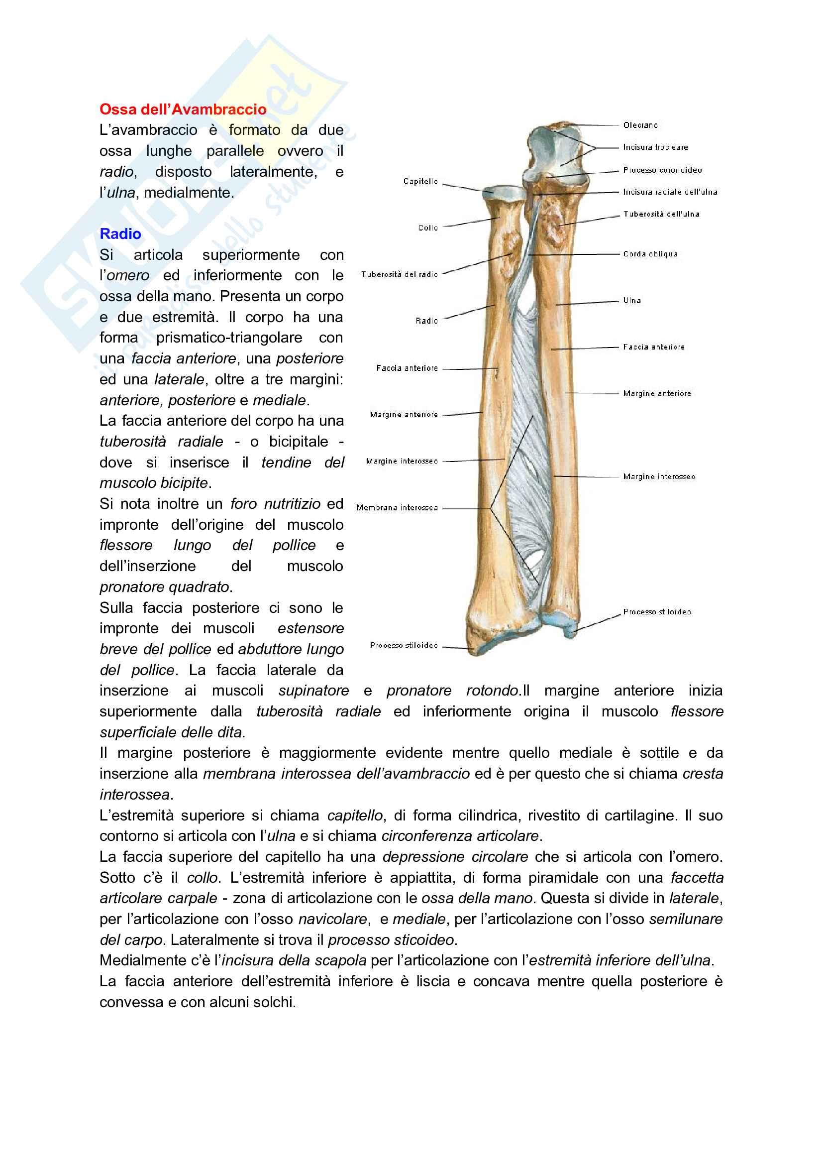 Anatomia applicata all'attività motoria Pag. 31