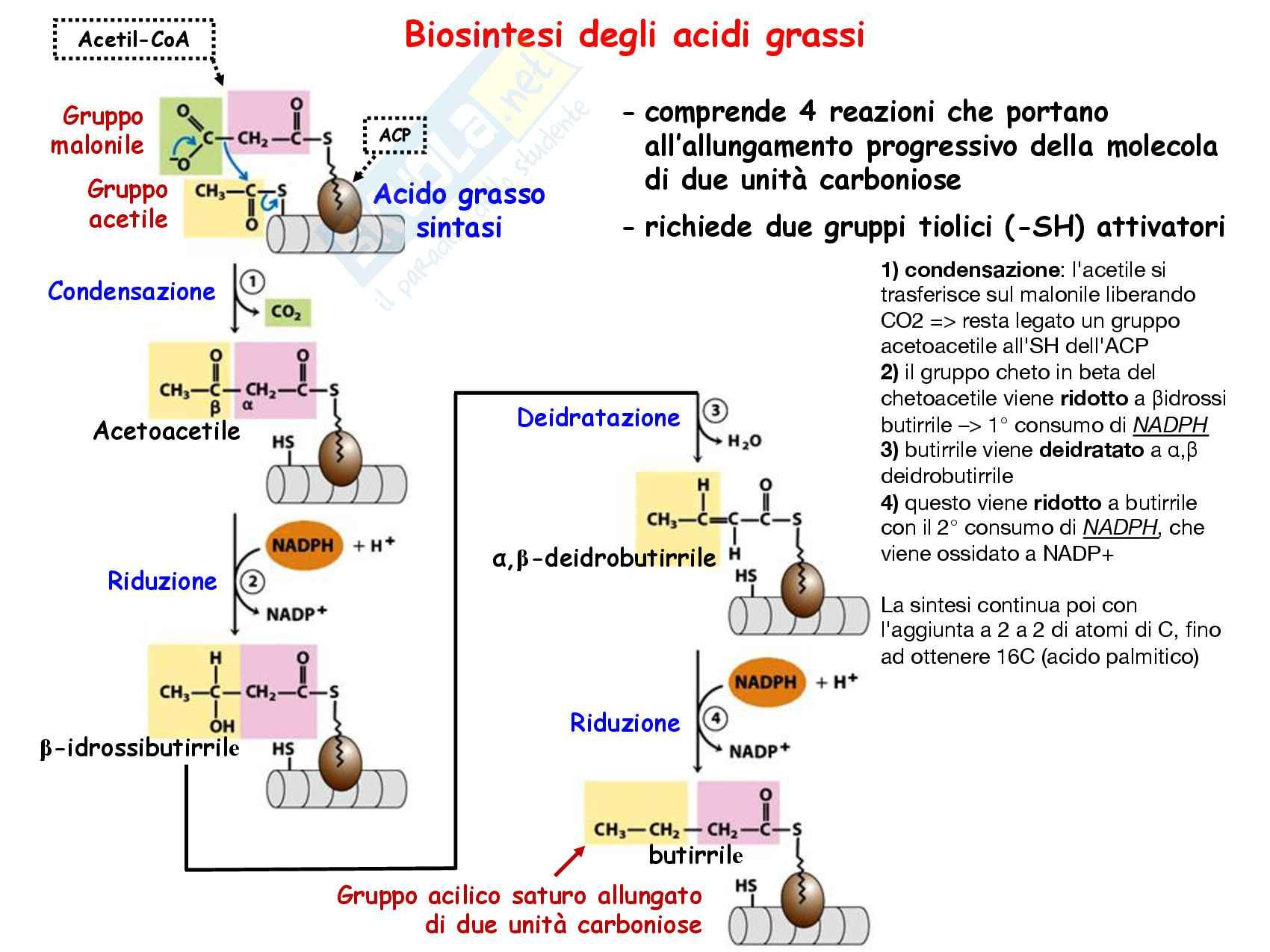 9 Biosintesi degli acidi grassi, reazioni chimiche, regolazione e funzioni Pag. 11
