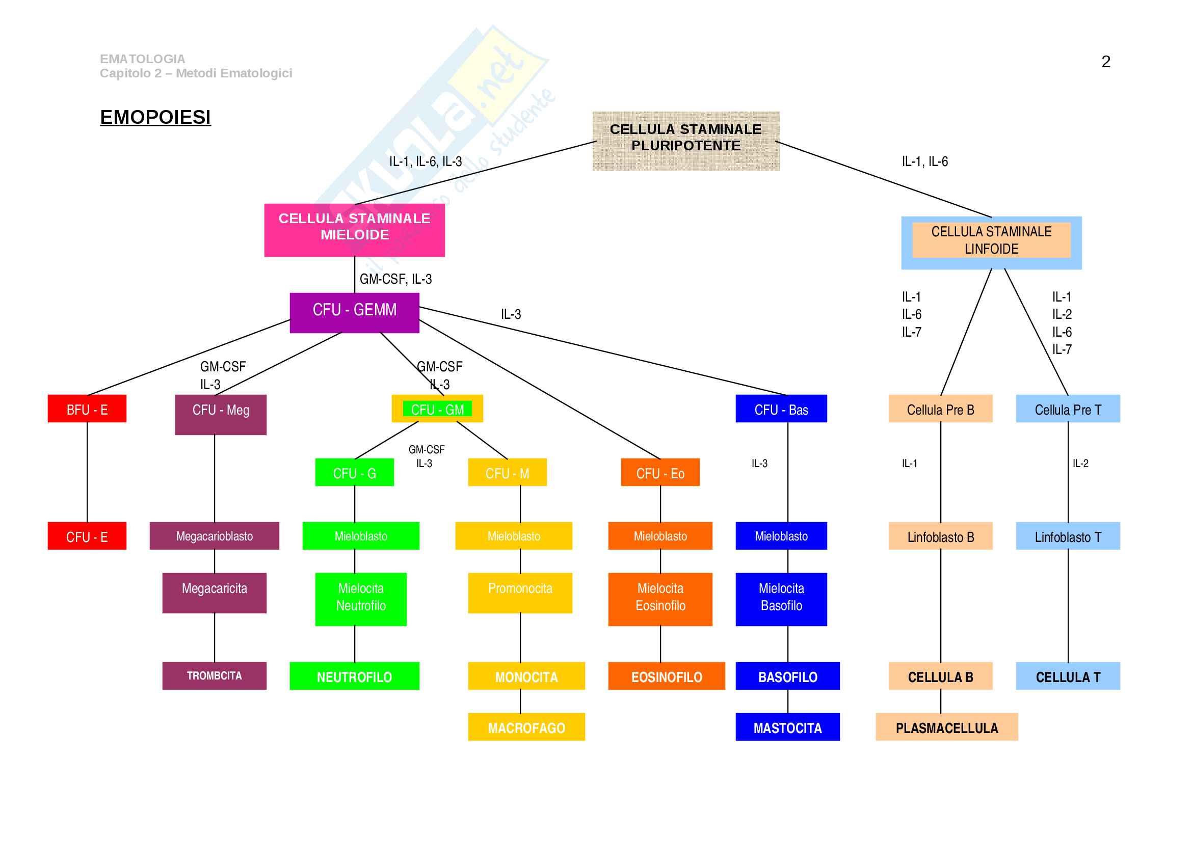 Esame emocromocitometrico Pag. 2