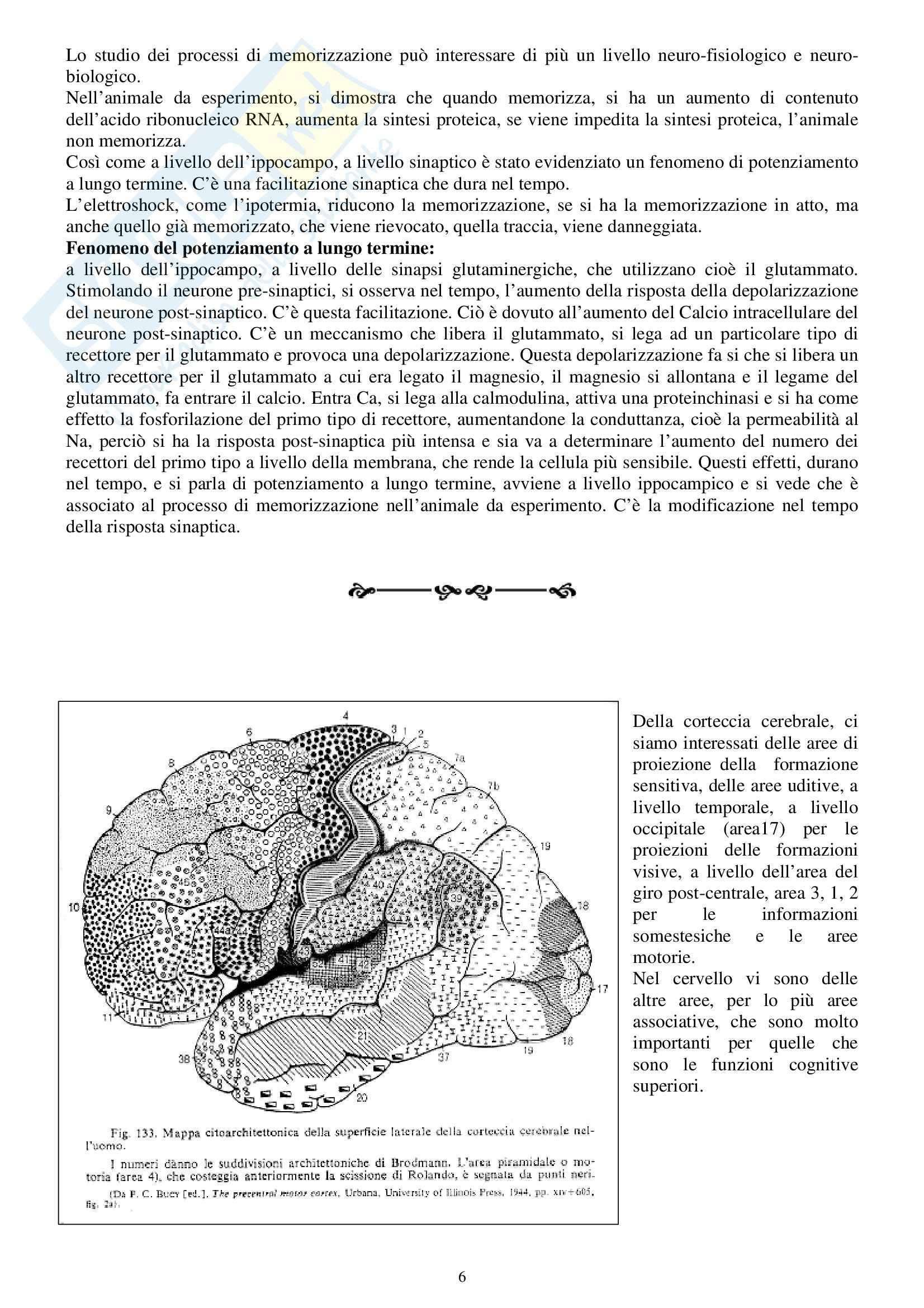 Fisiologia e biofisica - la memoria Pag. 6