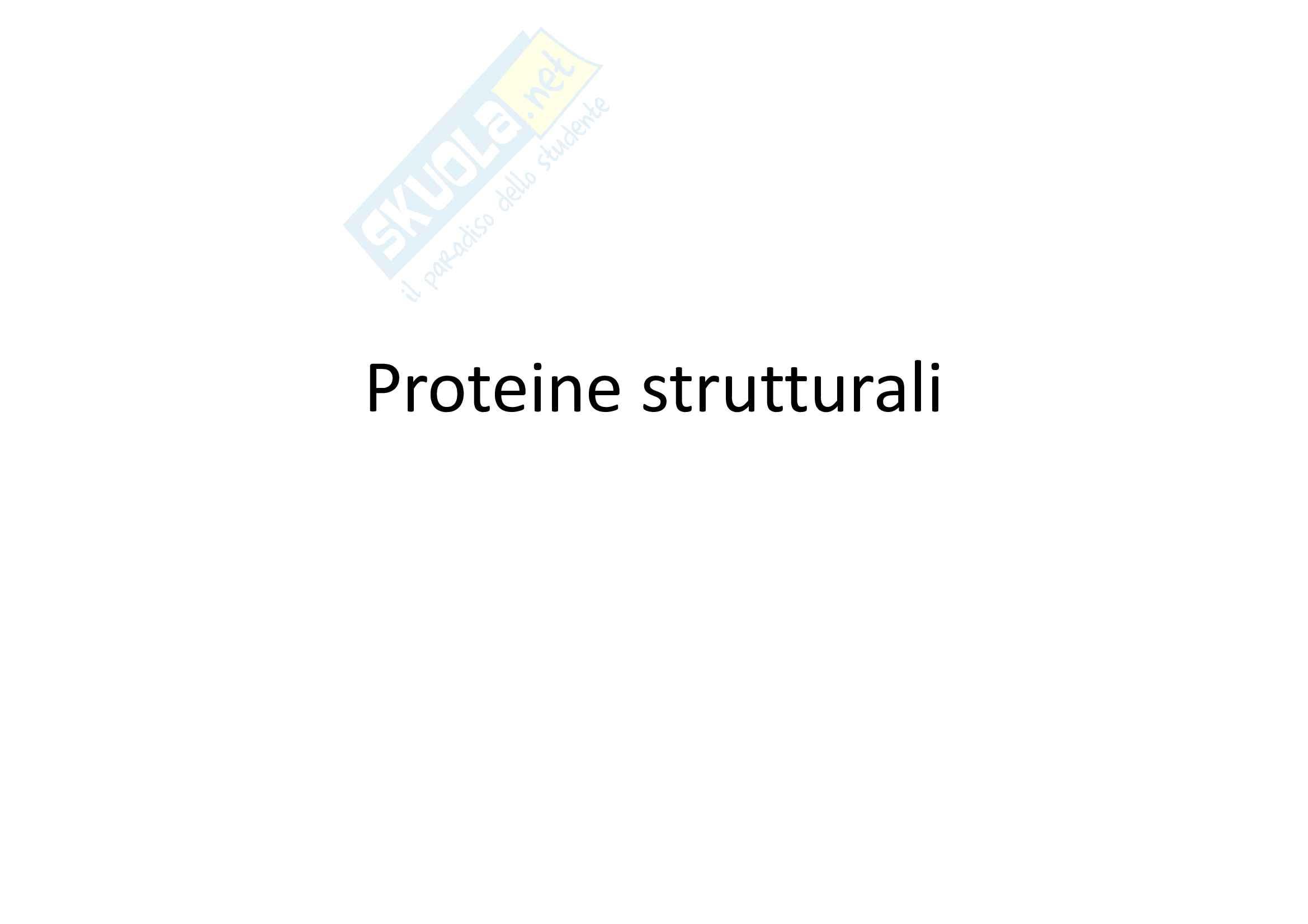 Proteine strutturali