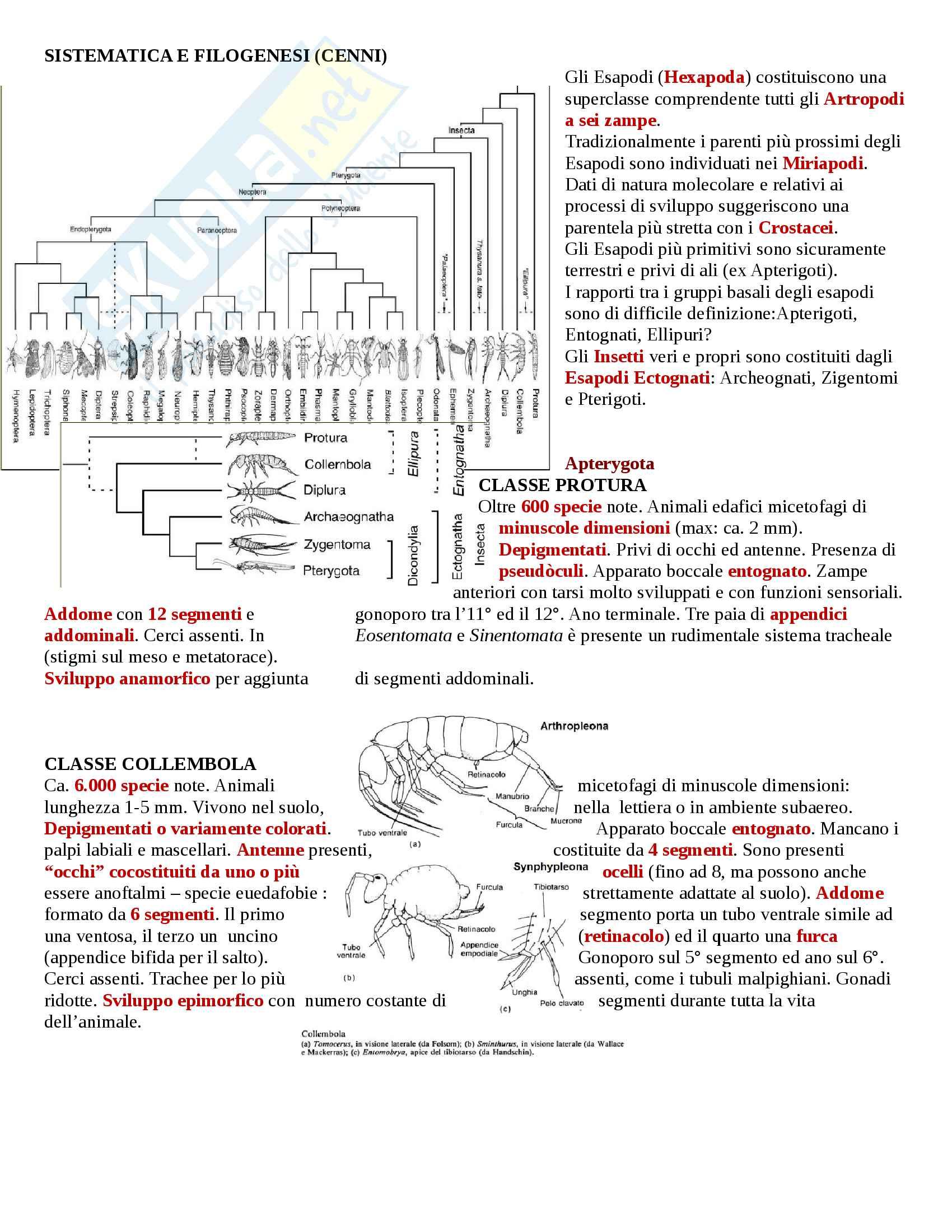 appunto L. Galli Entomologia