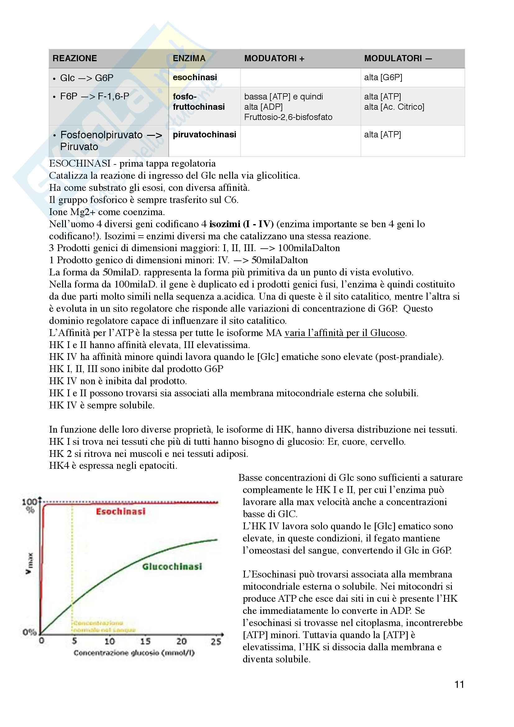 Metabolismo Glucidico Pag. 11