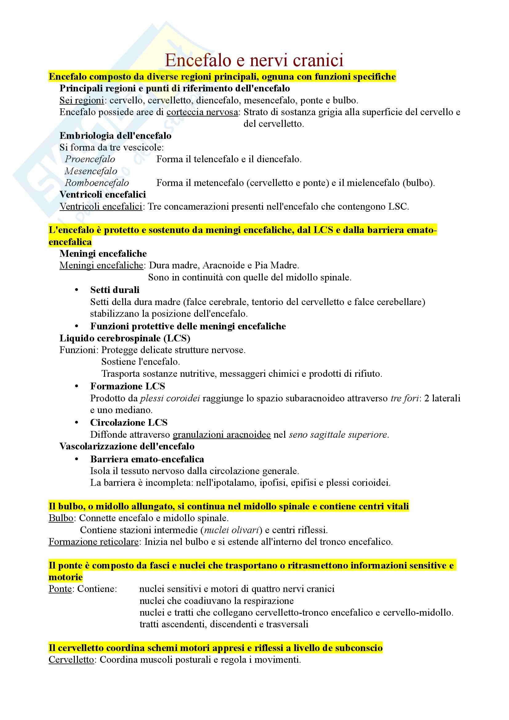 Anatomia - Encefalo e nervi cranici