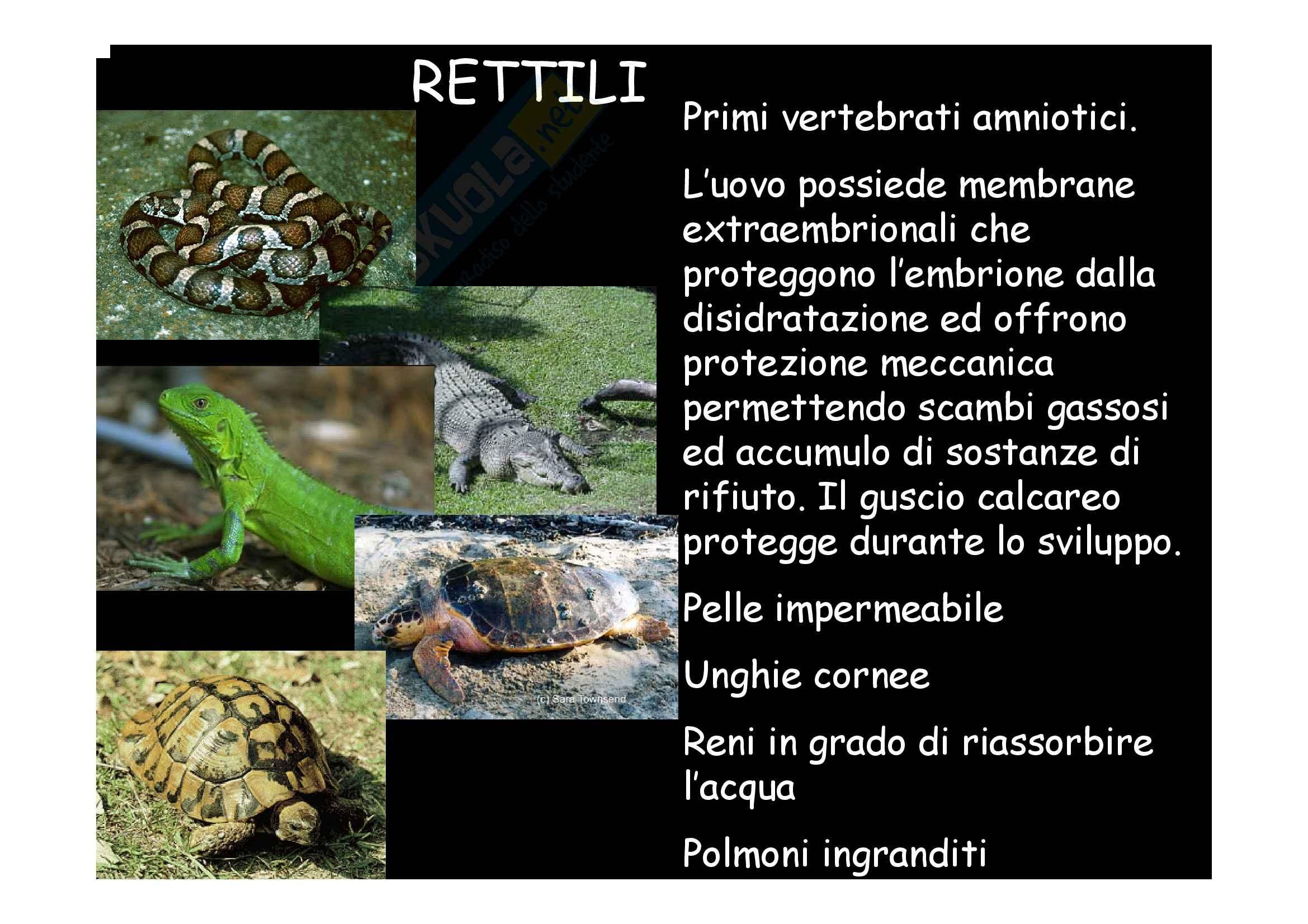 Zoologia - rettili