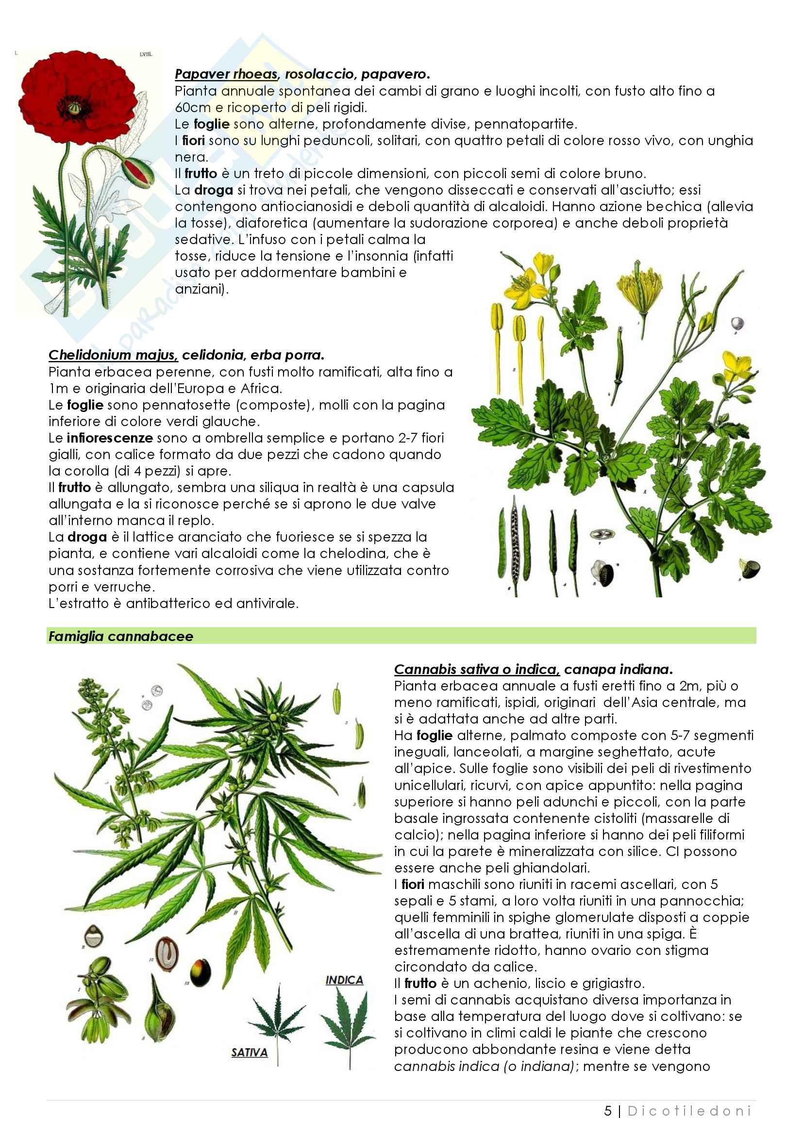 Appunti di biologia vegetale Pag. 36