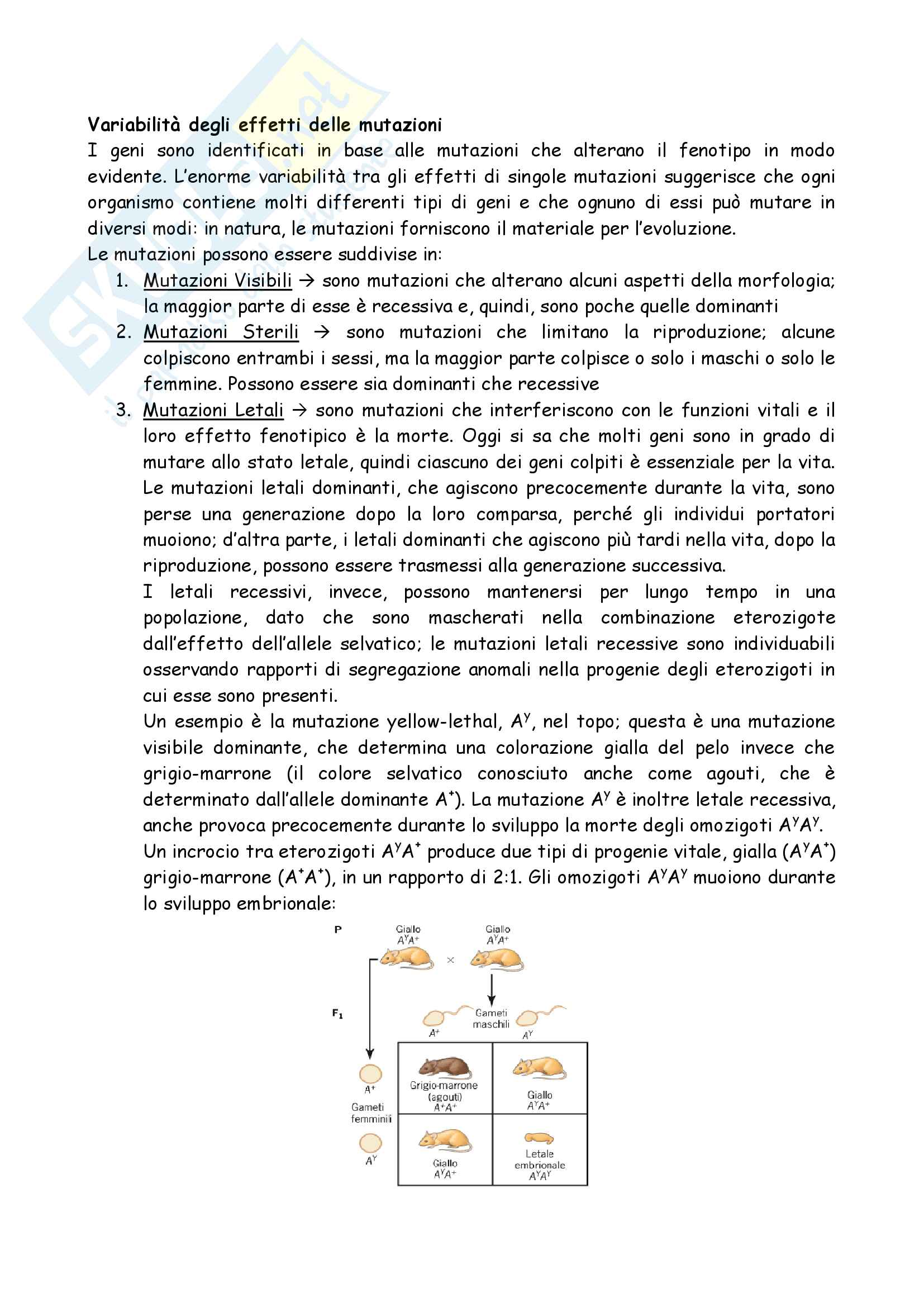 Totale Genetica Pag. 11
