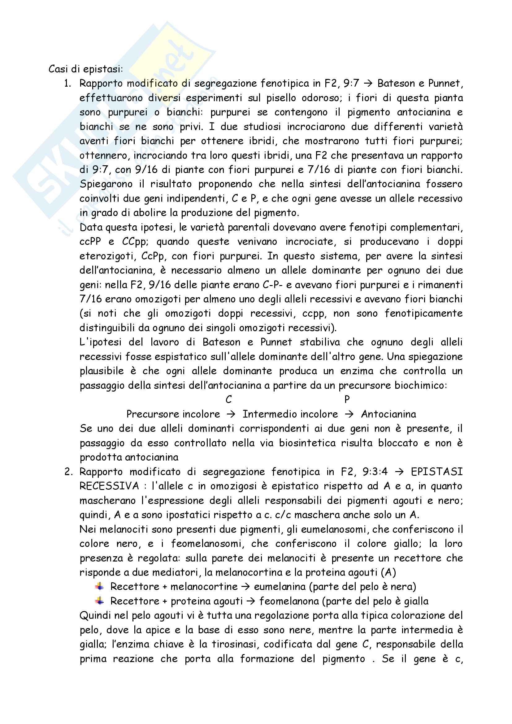 Totale Genetica Pag. 16
