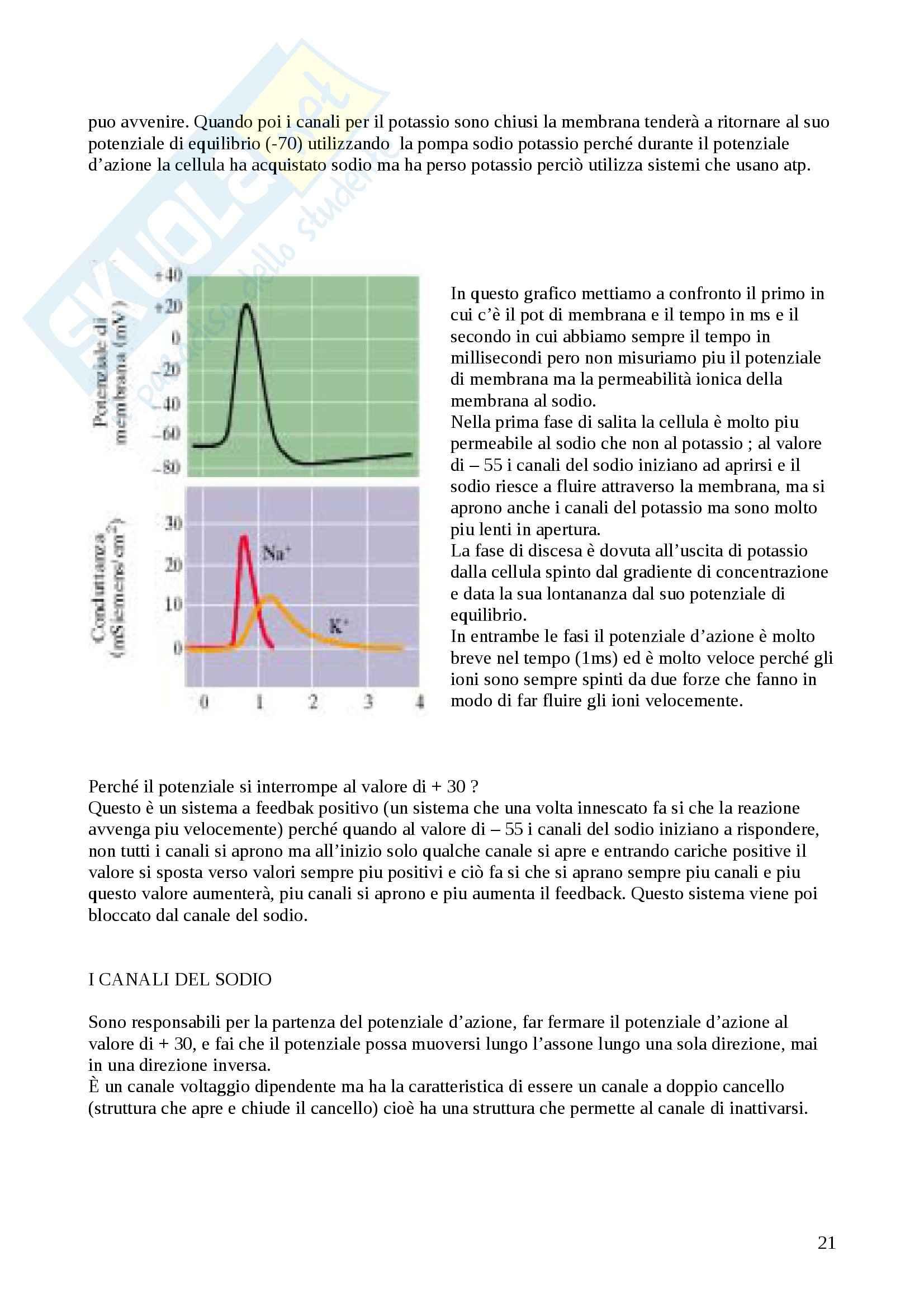 Riassunto esame Fisiologia degli organi e degli apparati, prof. Protasi Pag. 21