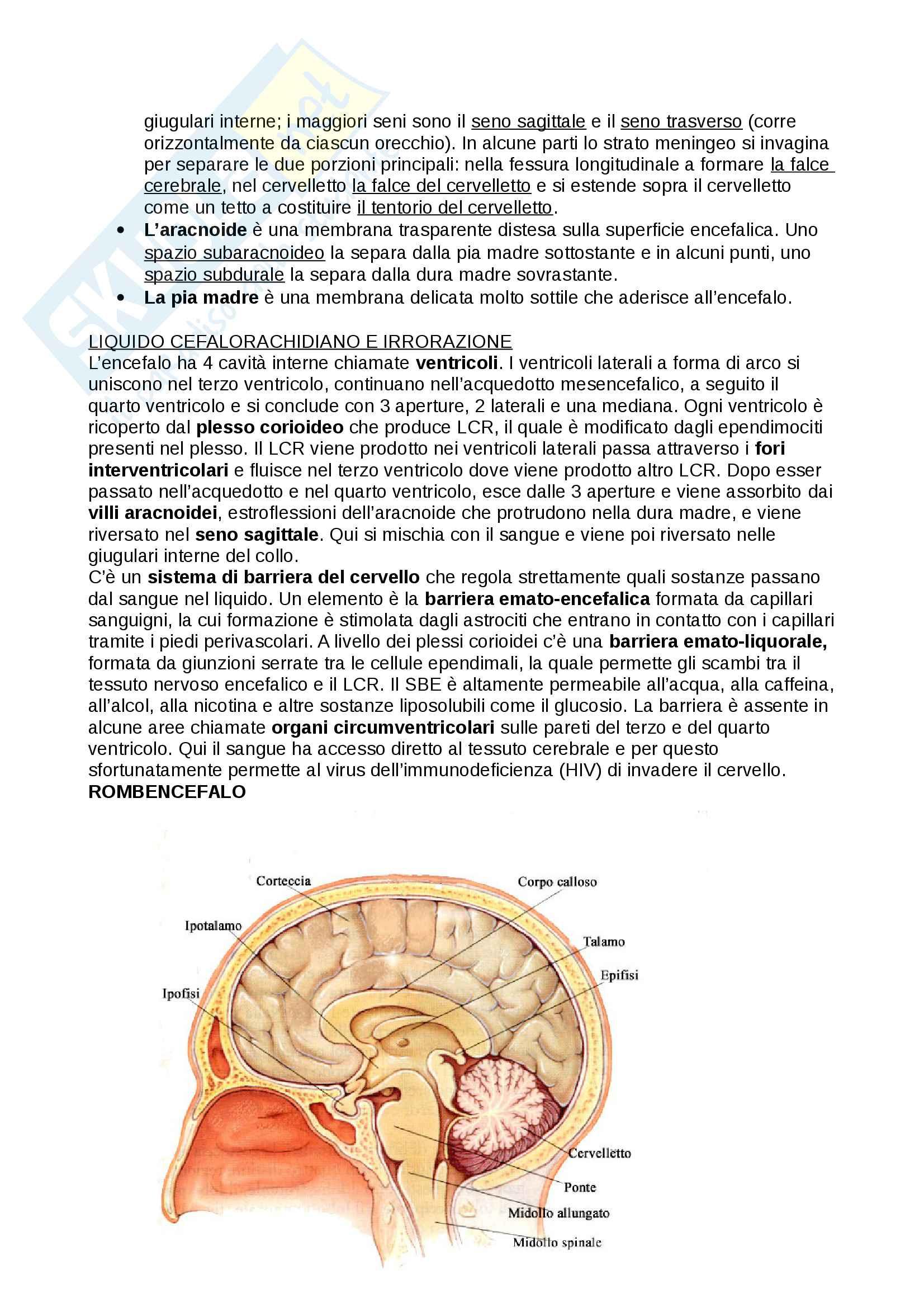 Anatomia dell'encefalo e le sue principali funzioni integrative Pag. 2