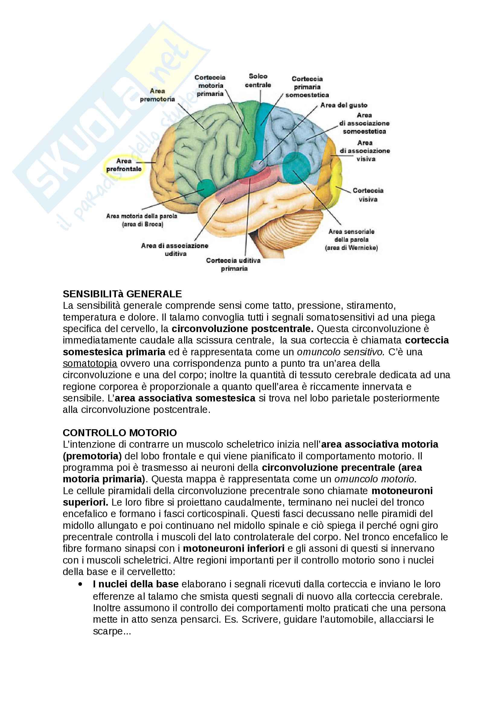 Anatomia dell'encefalo e le sue principali funzioni integrative Pag. 6
