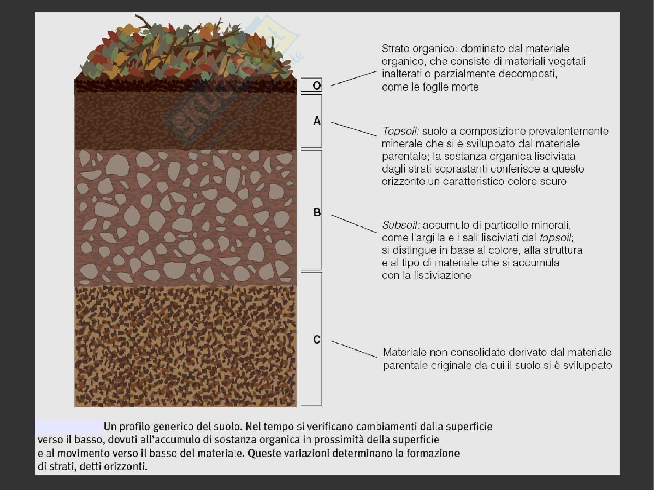 Ecologia: Il suolo