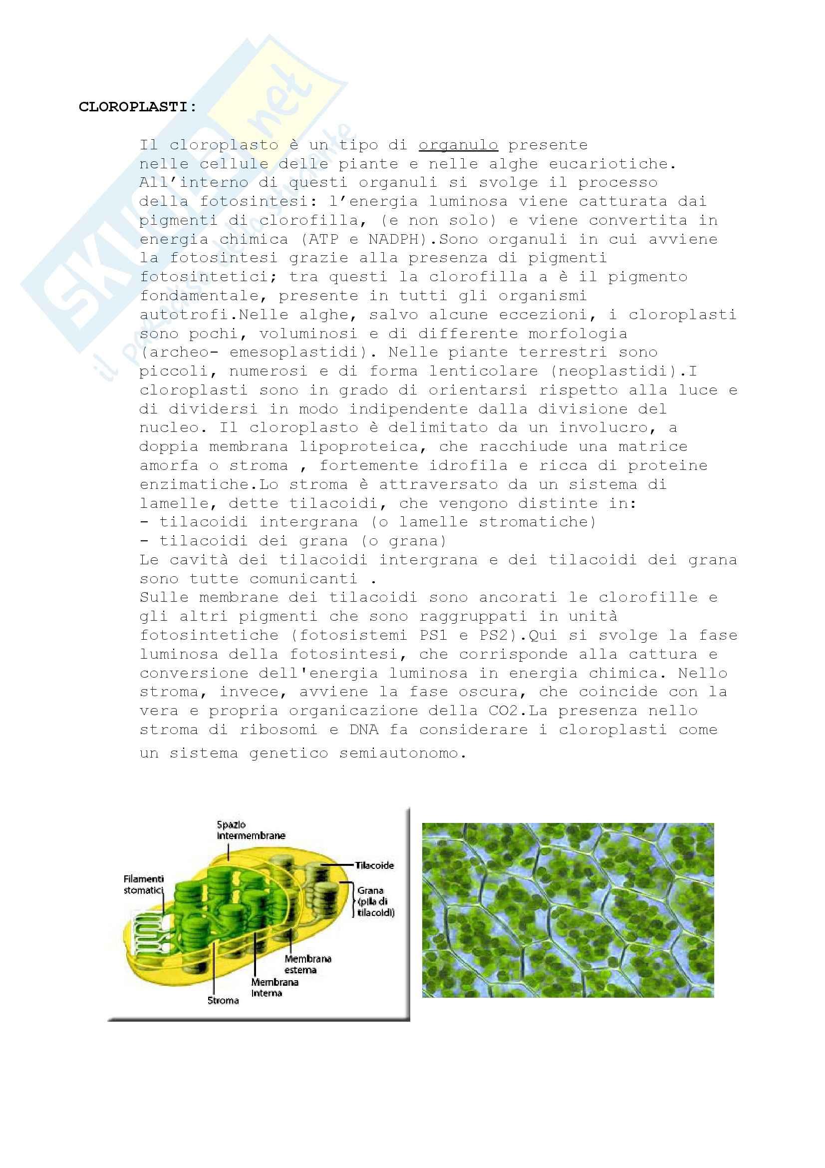 Nomenclatura e concetti generali, Biologia Vegetale Pag. 6