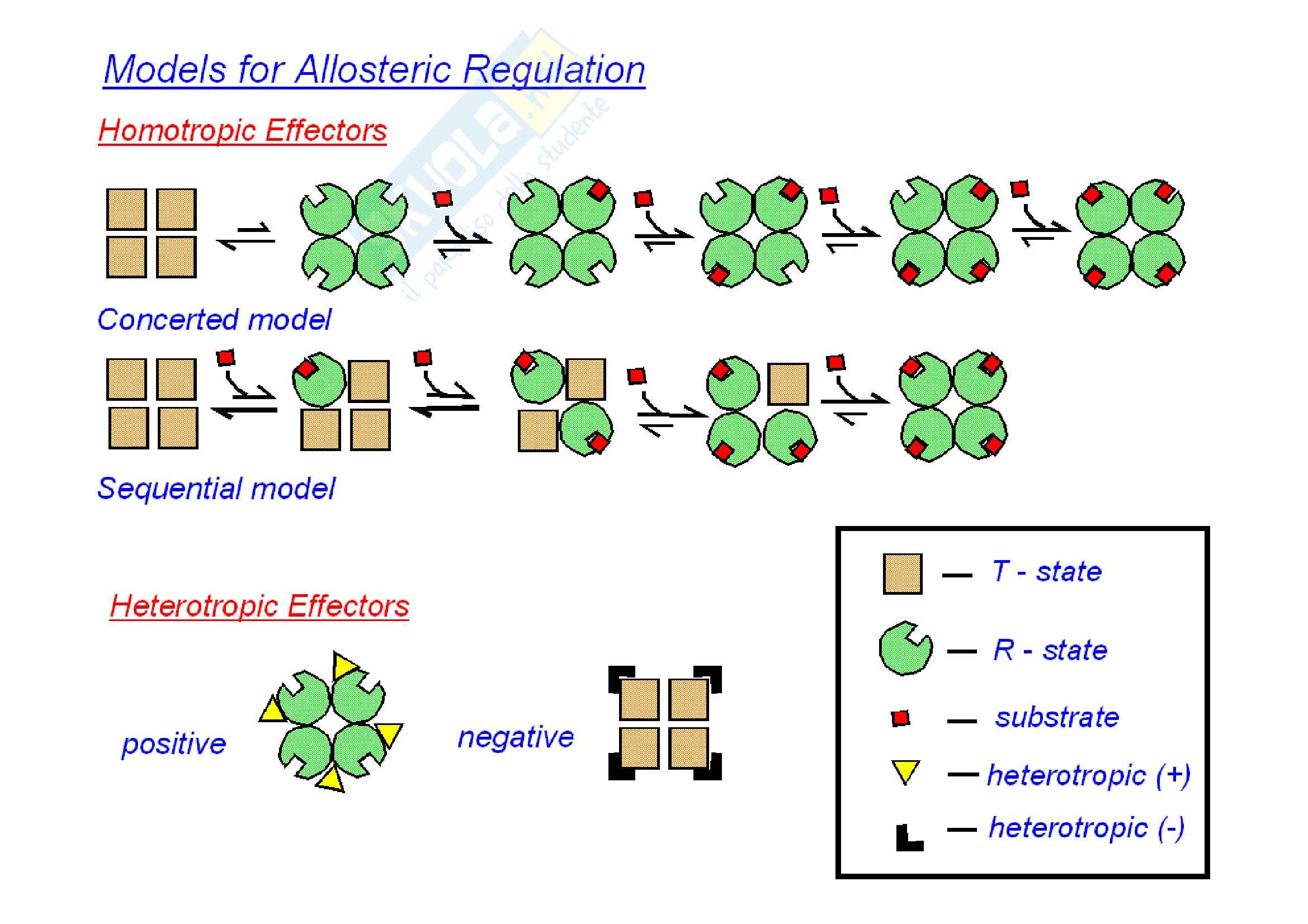 Enzimi allosterici Pag. 2