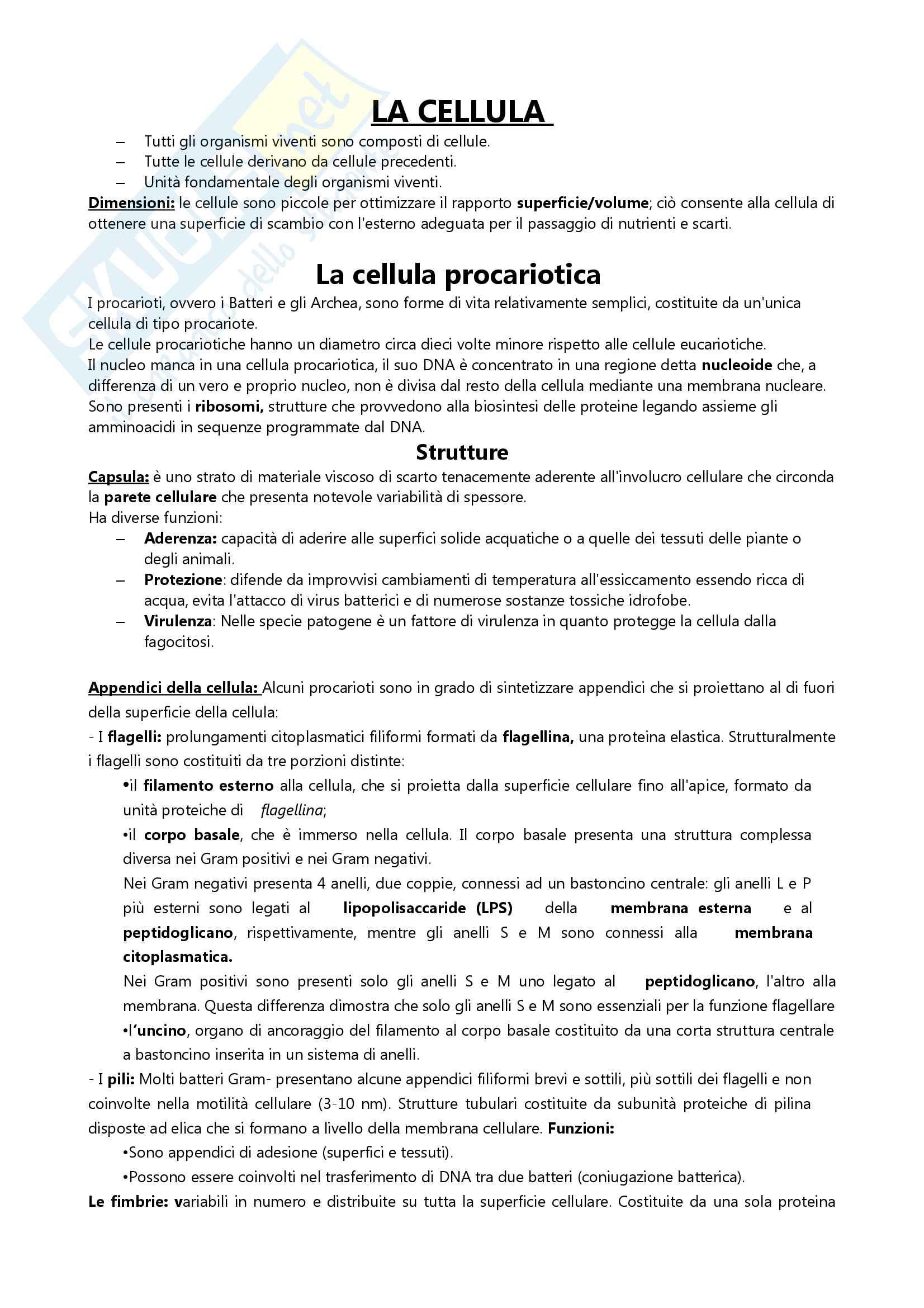 Appunti sulla Cellula, Esame di Fondamenti di Biologia