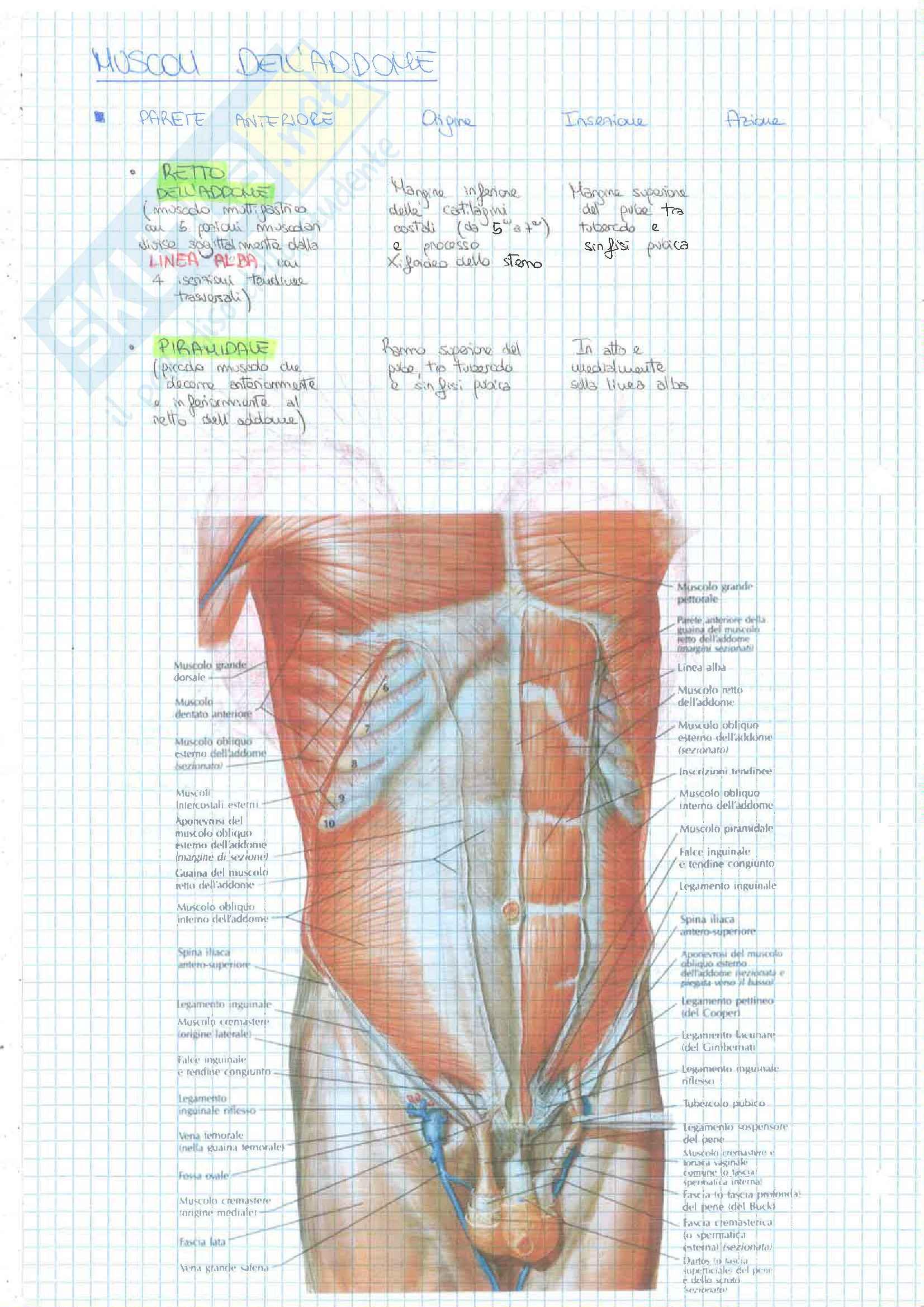 1-2 Esoneri(Tessuti Ossa Articolazioni Muscoli) Pag. 91