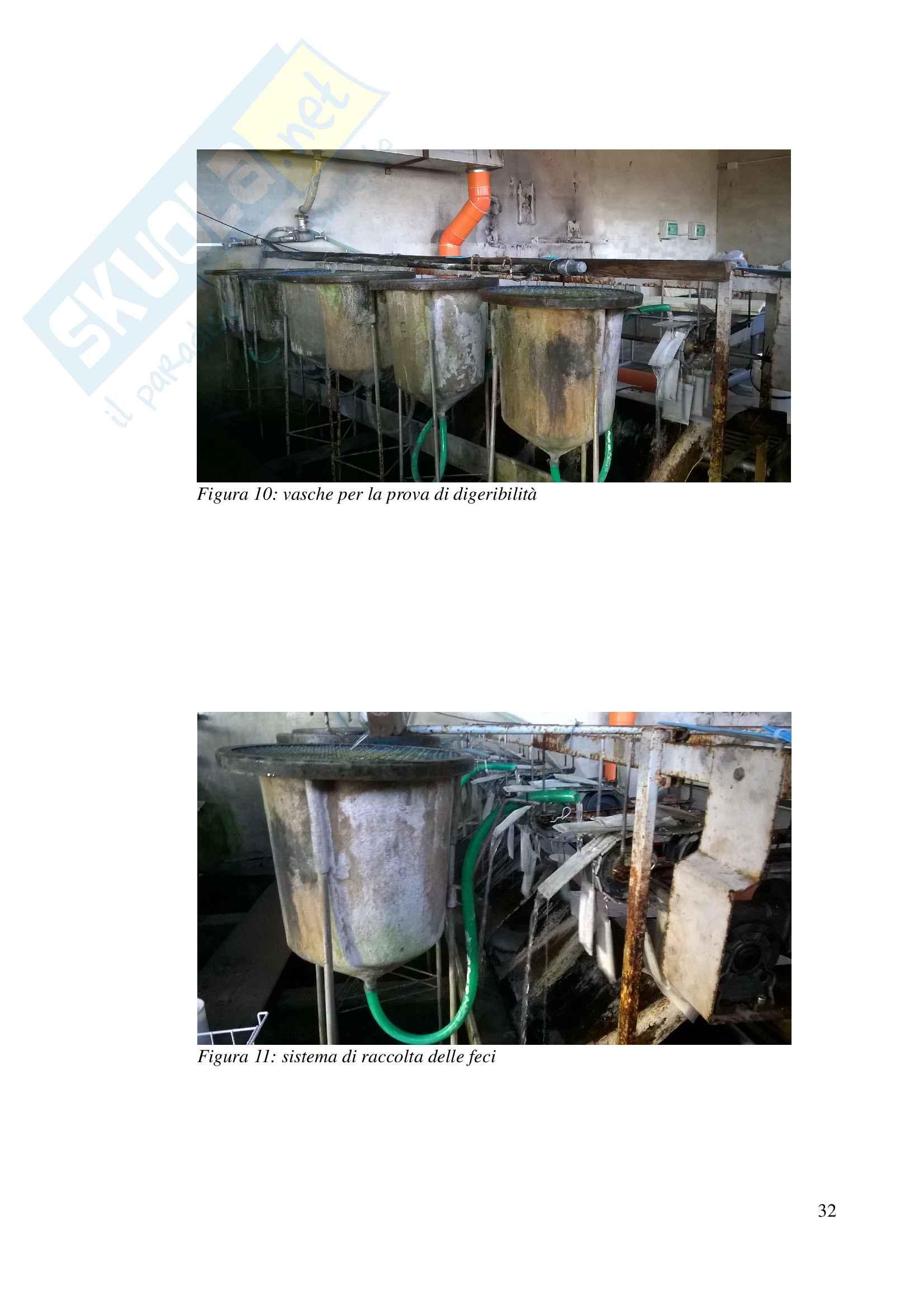 La farina di insetti una potenziale materia prima per l acquacoltura moderna Pag. 36